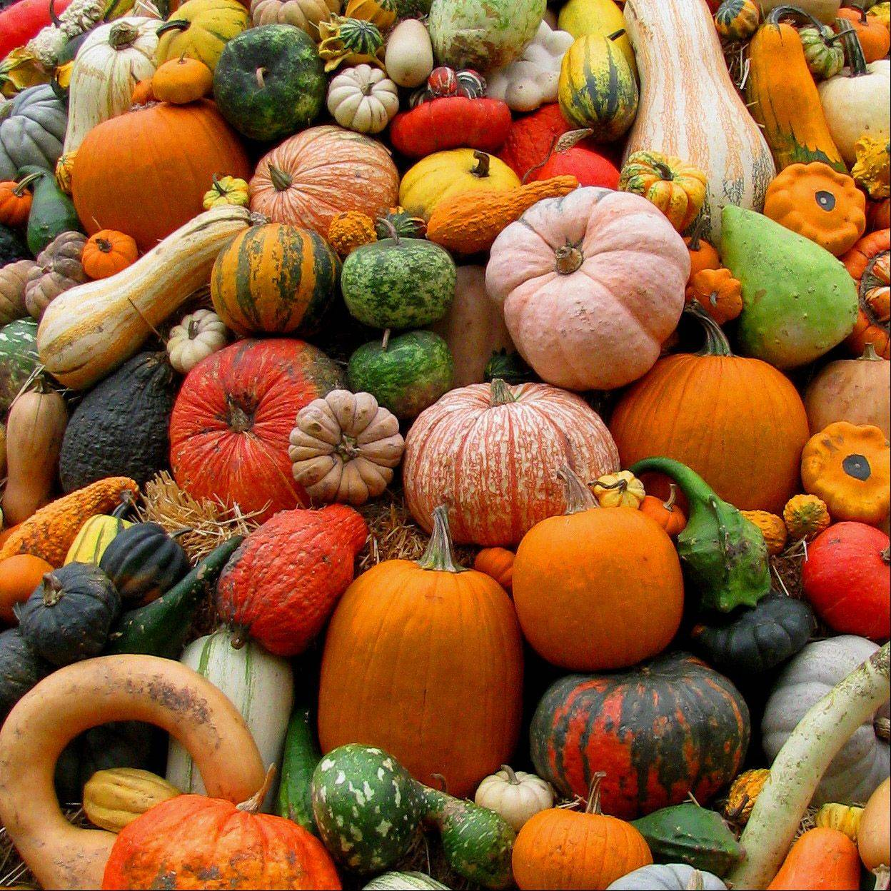 An autumn harvest at the Chicago Botanic Garden in Glencoe on October 5th.
