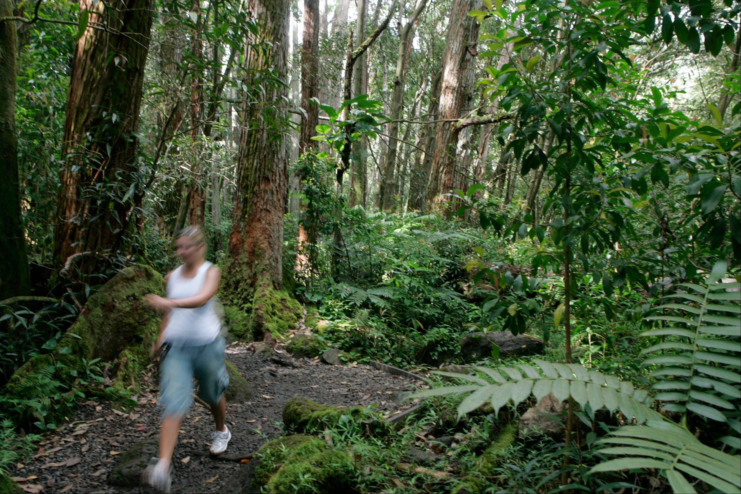A hiker tackles the Manoa Falls Trail in Oahu's Manoa Valley in Honolulu.