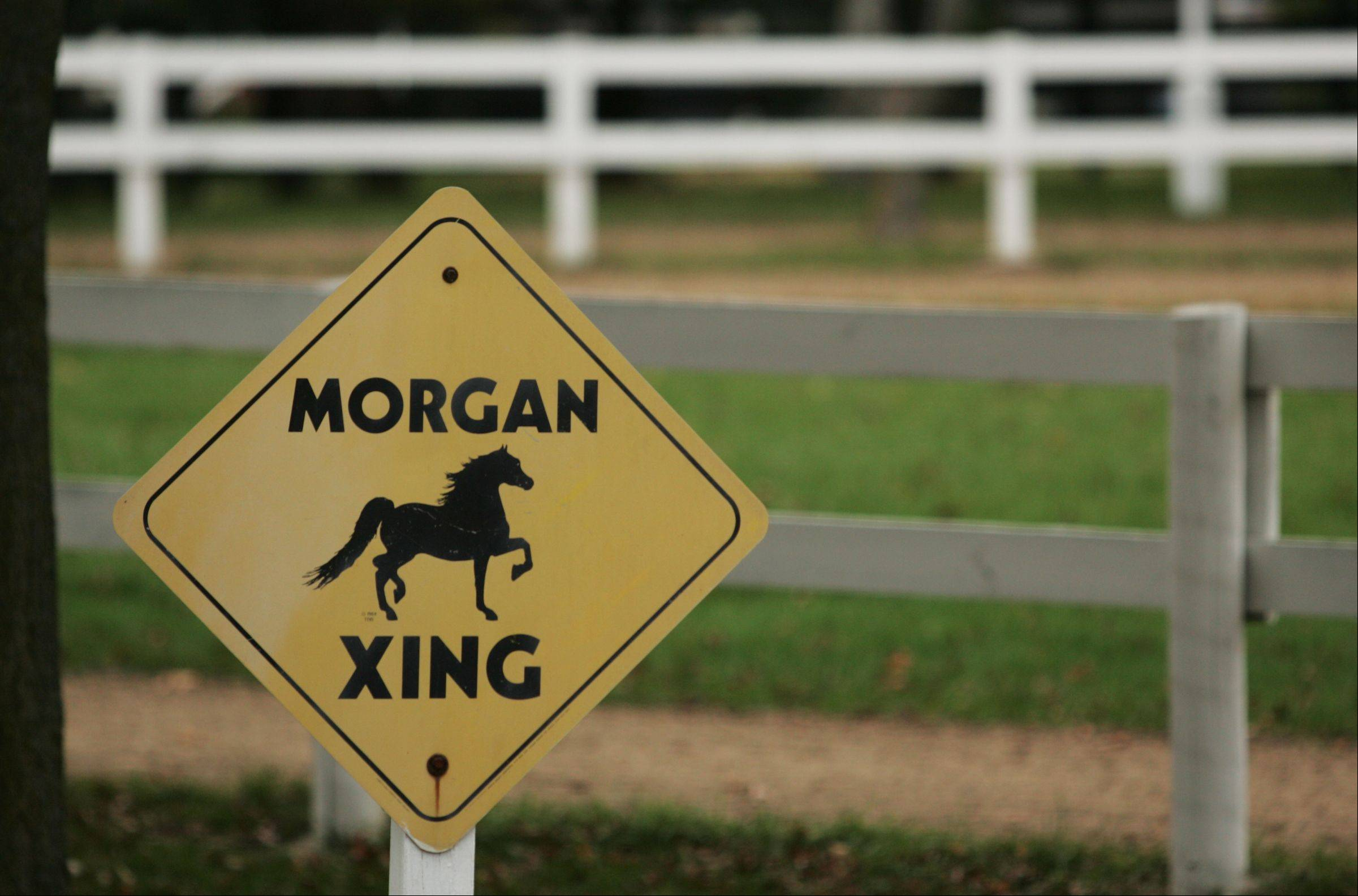 Most of the horses bred and trained at Merriehill Farm in Marengo are Morgans.