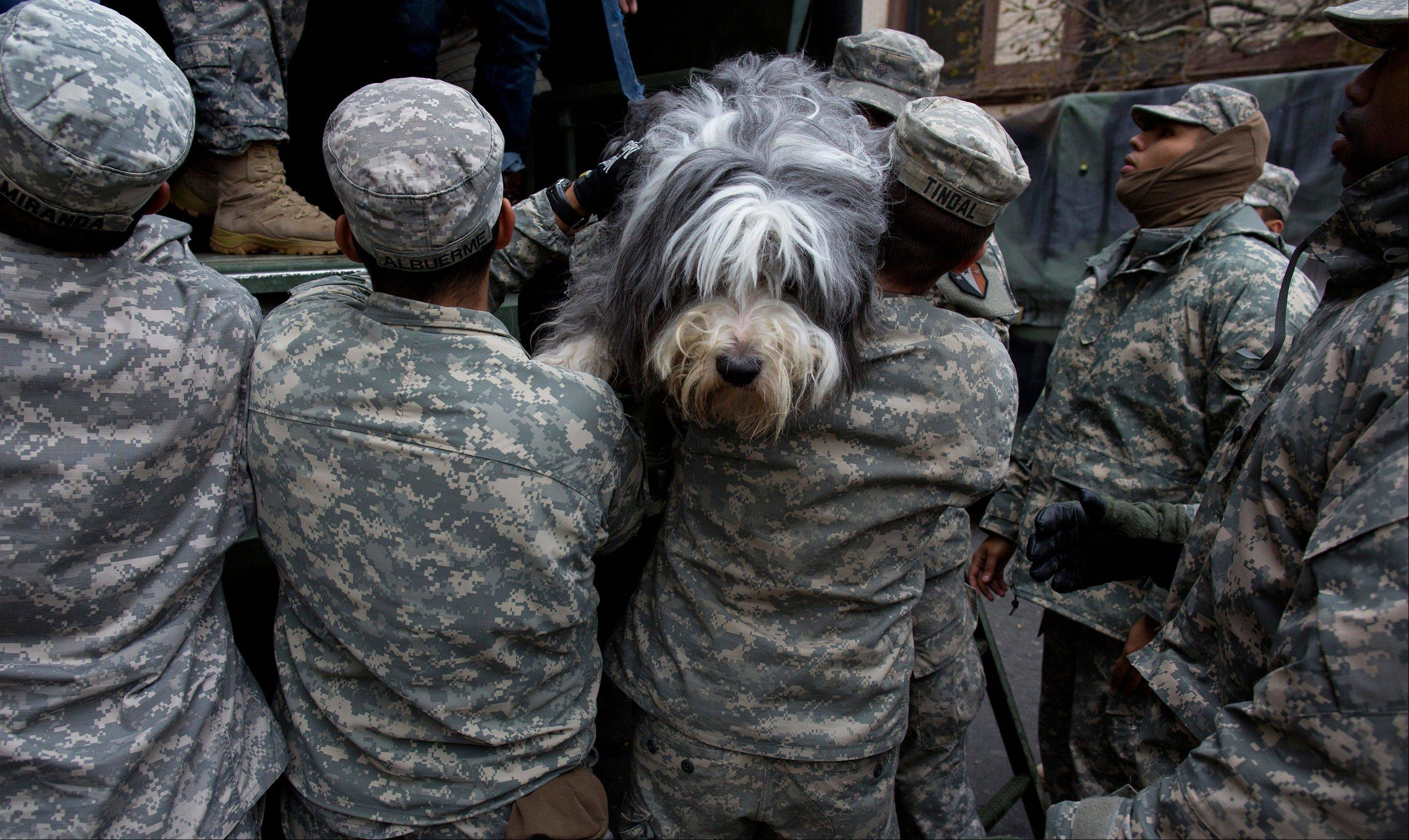 A dog named Shaggy is handed from a National Guard truck to National Guard personnel after the dog and his owner left a flooded building in Hoboken, N.J., in the wake of superstorm Sandy.