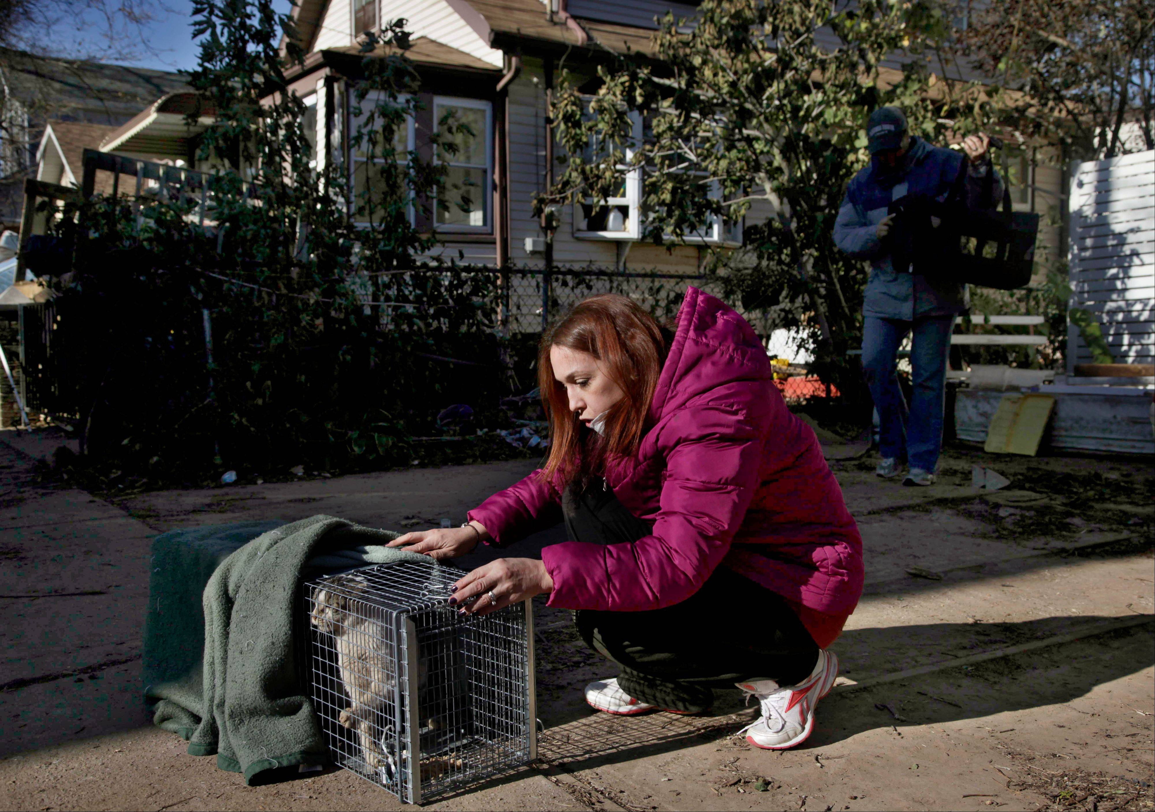 Dina McKenzie traps a stray cat in the New Dorp section of the Staten Island borough of New York. After Superstorm Sandy passed through, McKenzie was working with two animal rescue groups to help displaced homeowners find their pets and catch strays that need care.