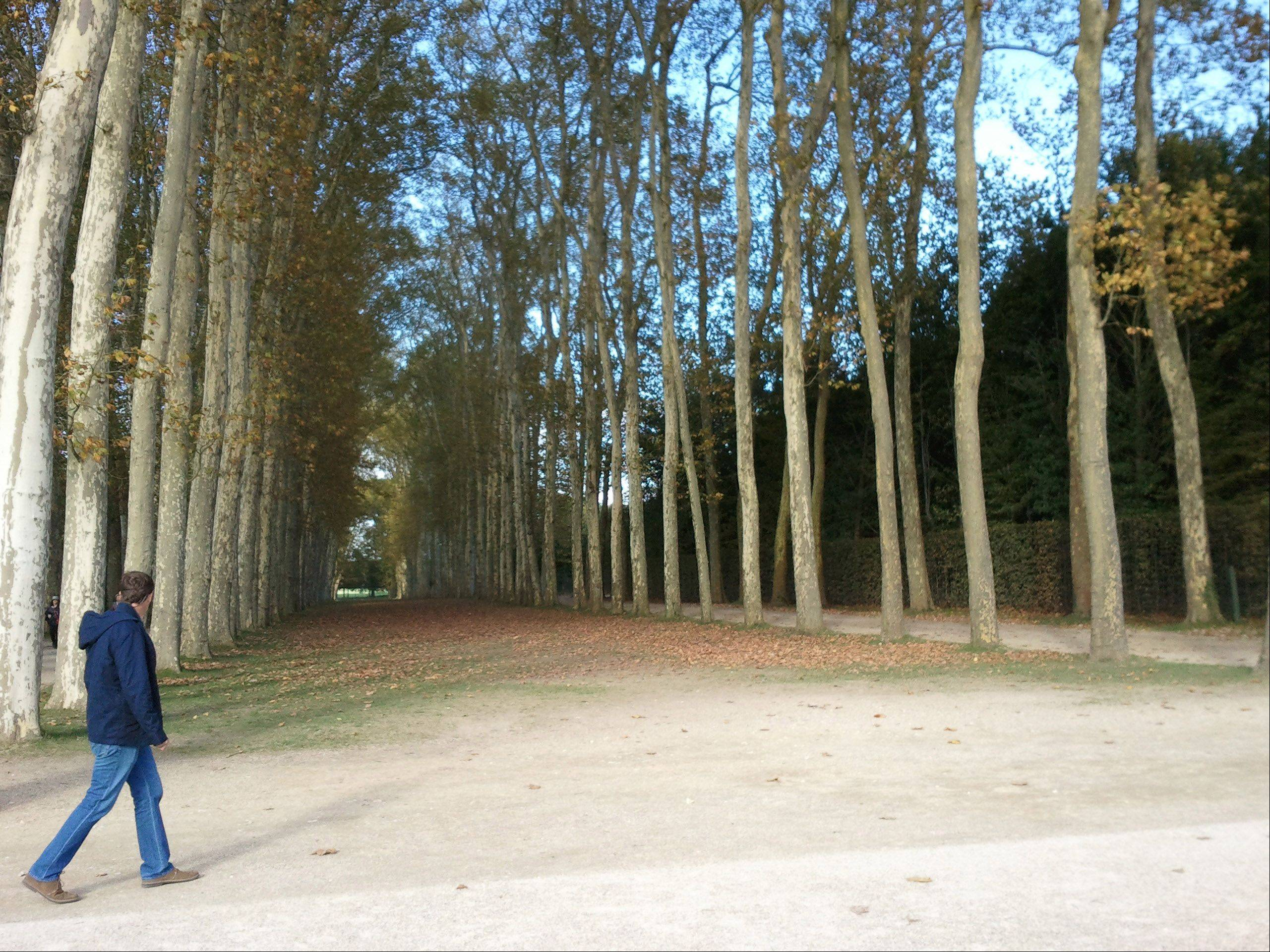 A man walks past the gardens at the palace of Versailles, France on October 12.