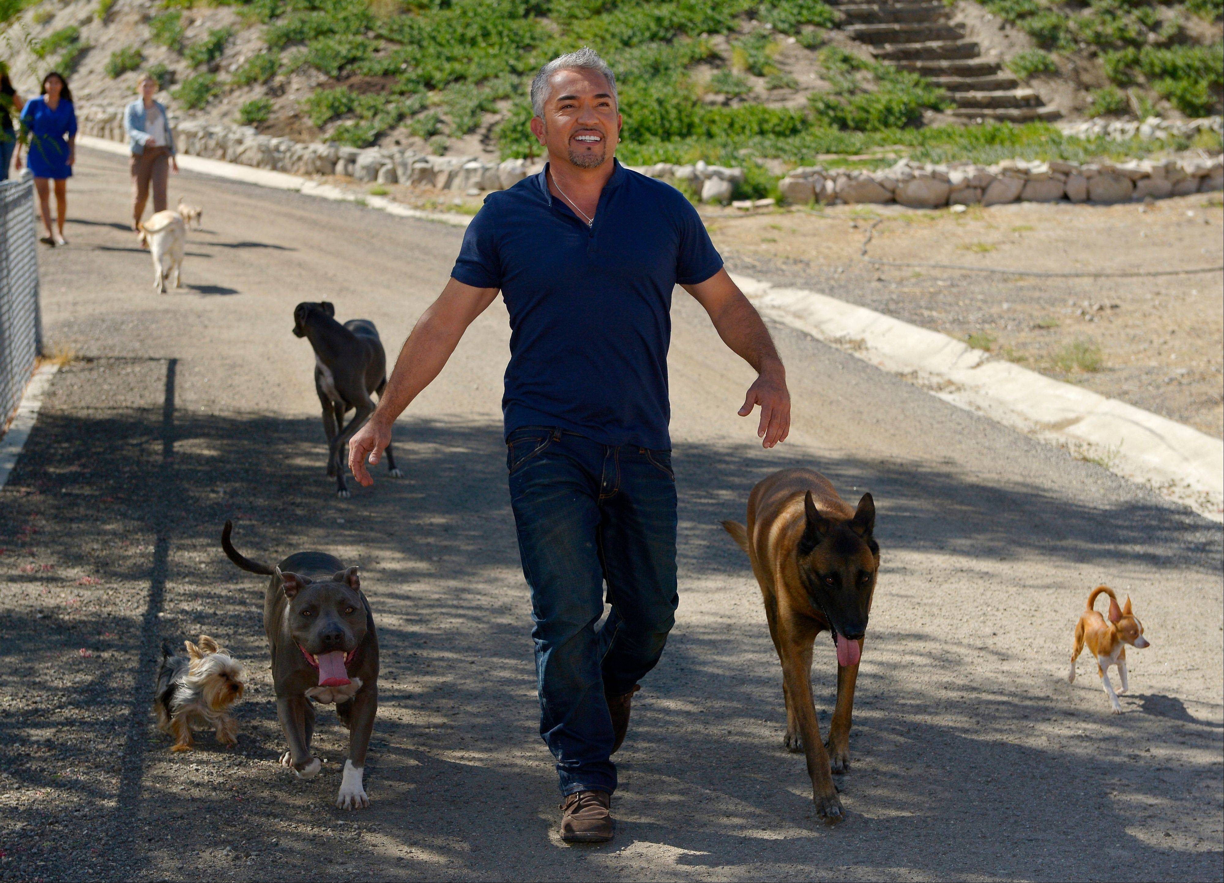In this Oct. 18, 2012 photo, Cesar Millan walks down to his horse stables with his dogs at his Dog Psychology Center, in Santa Clarita, Calif. At 13, his dream was to become the best dog trainer in the world. At 21, alone and unable to speak English, he crossed the border and lived on the streets for two months before getting a job as a groomer and walker.