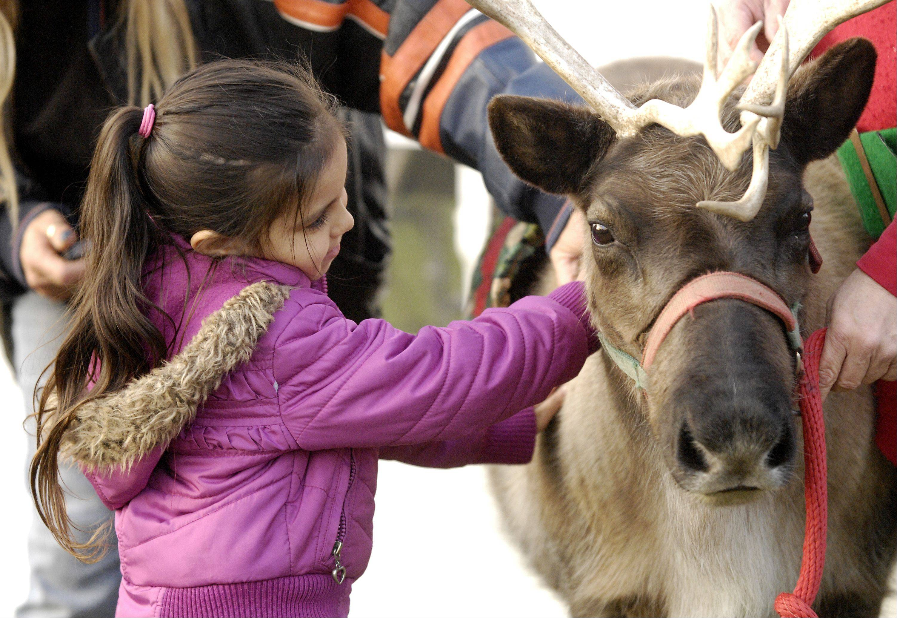 Hailey Ochoa, 5 of Bensenville pets a reindeer during the Bensenville Holiday Magic event Sunday in the Town Center.