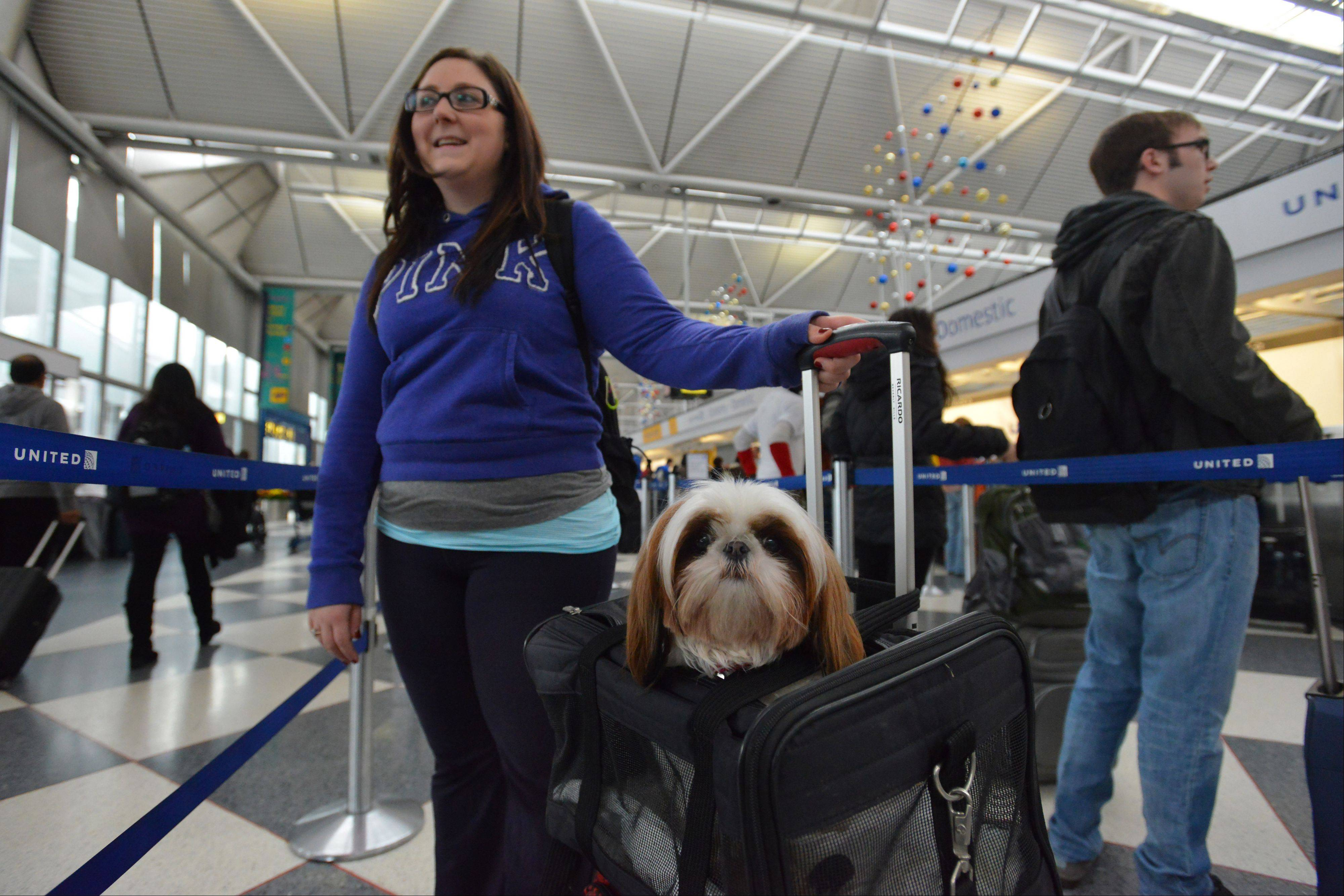 Brittany Trauthwein of Chicago and her dog Tiffany head out of Chicago's O'Hare International Airport on a foggy Wednesday hoping to make it to North Carolina to see family.