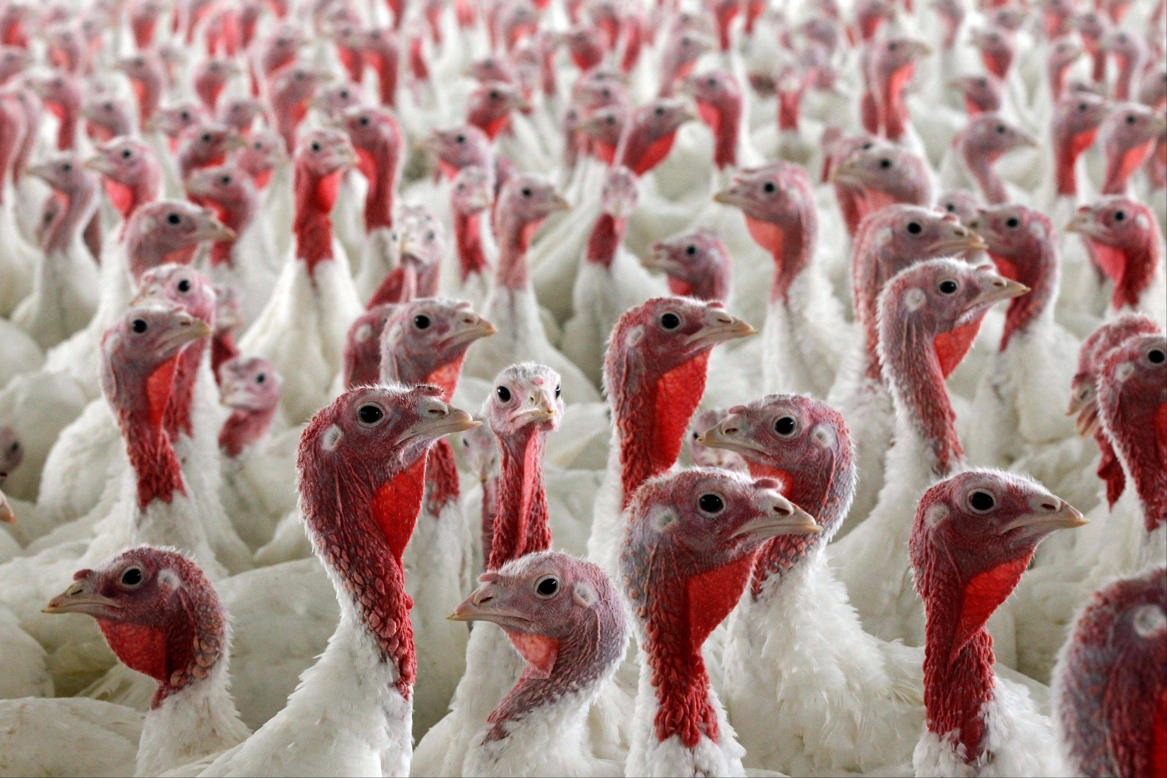 How many turkeys will be raised in the U.S. this year? 254 million, the U.S. Census Bureau says. We also import roughly $12 million in turkeys from Canada.