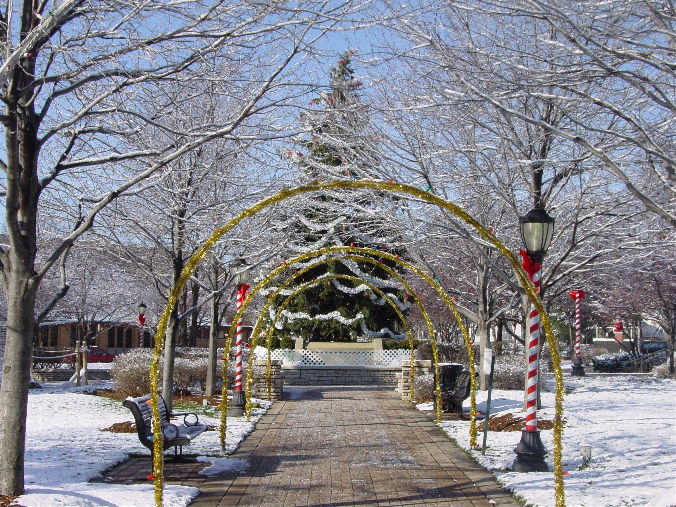 A previous year�s Arlington Heights Christmas tree in North School Park.