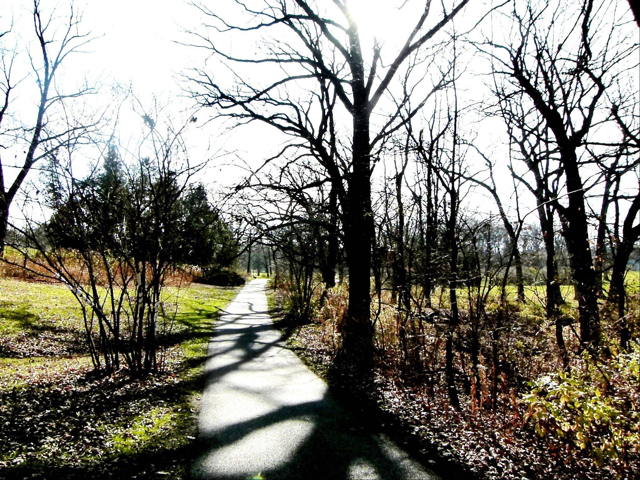 Starkly bare trees on the Joy Path at Morton Arboretum indicate winter is on the way.