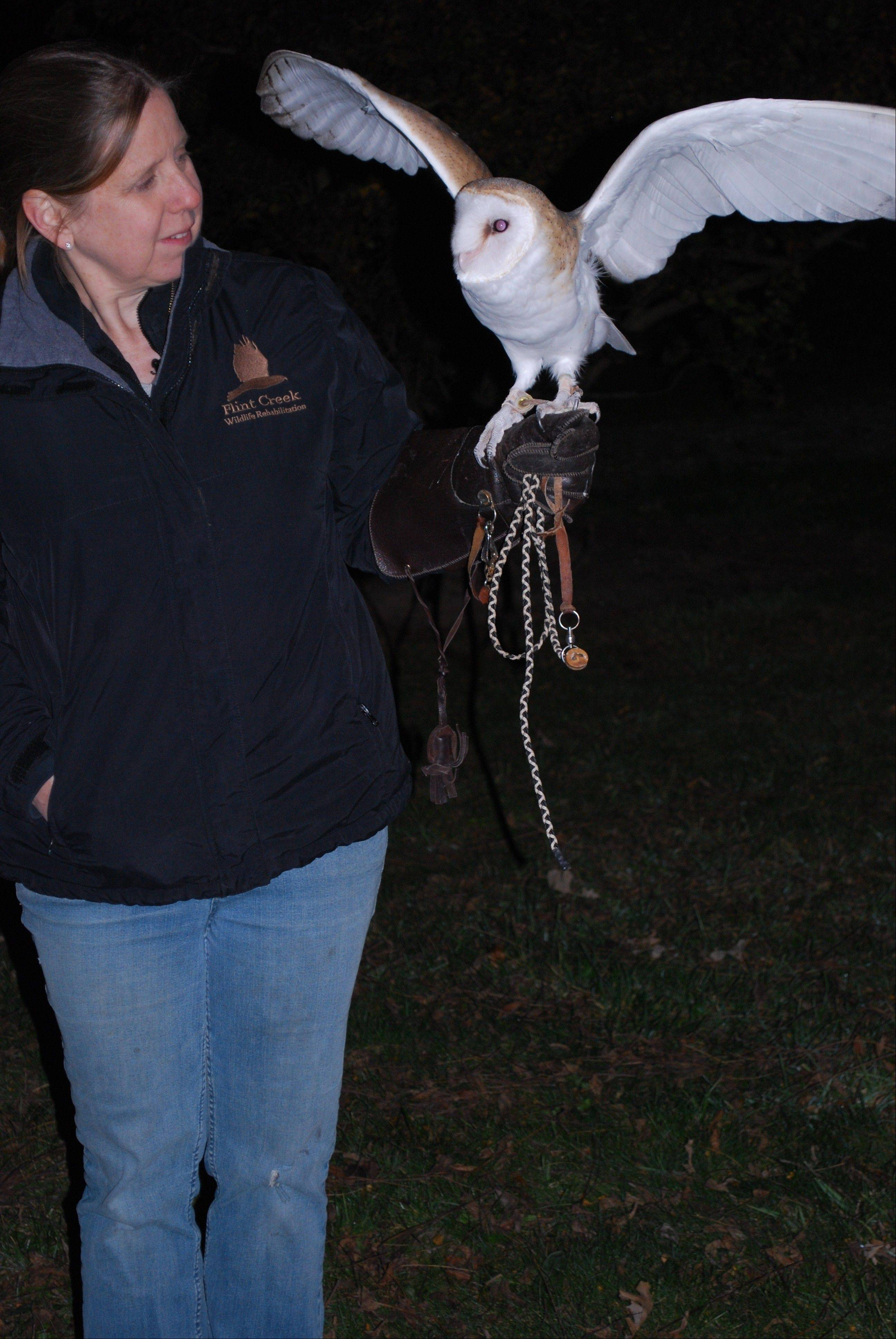 Dawn Keller and Pip the barn owl at Citizens for Conservation's Owl Prowl class.