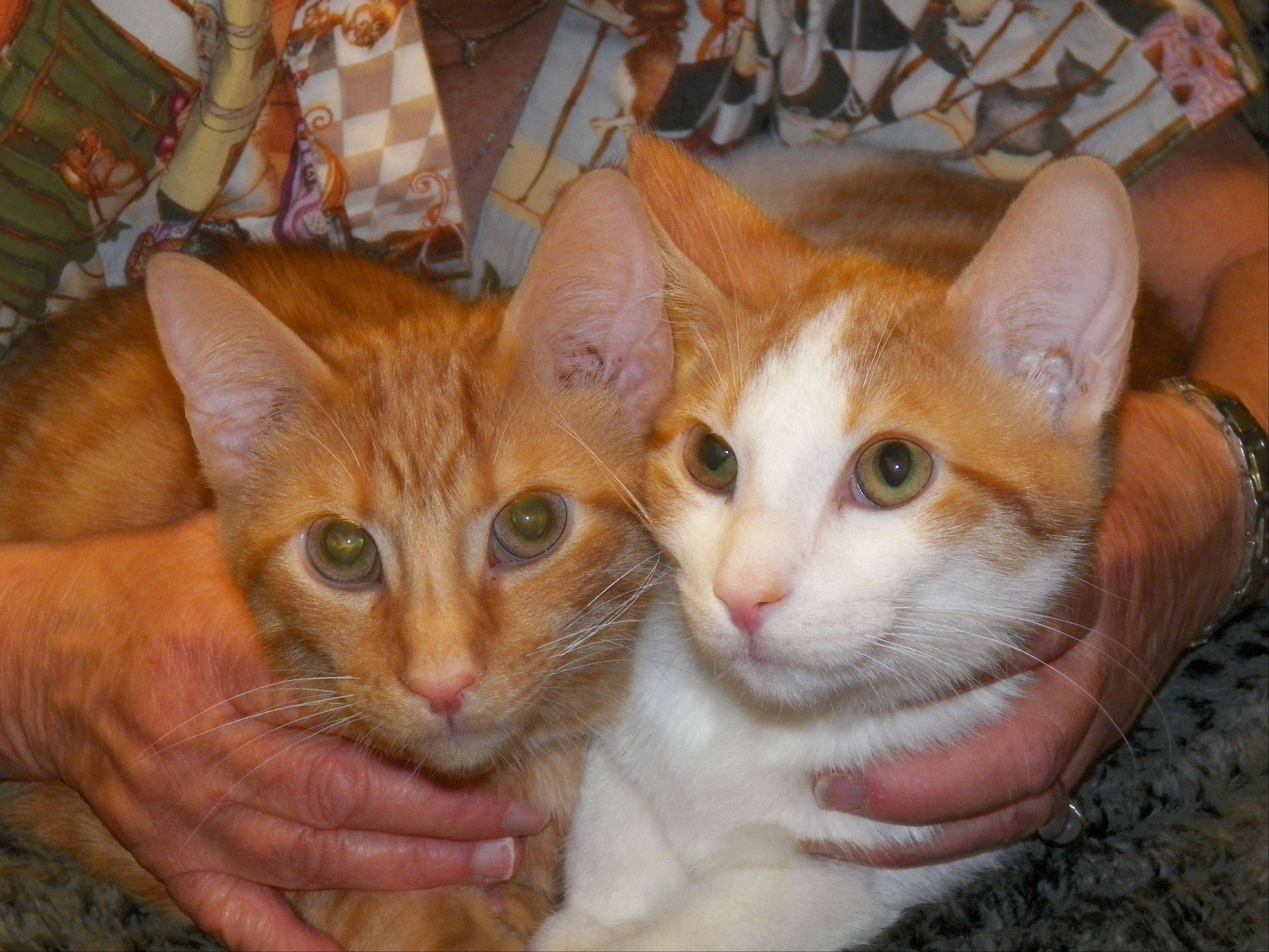 Roger and Rollie, 8-month-old buddies, need a home for the holidays.