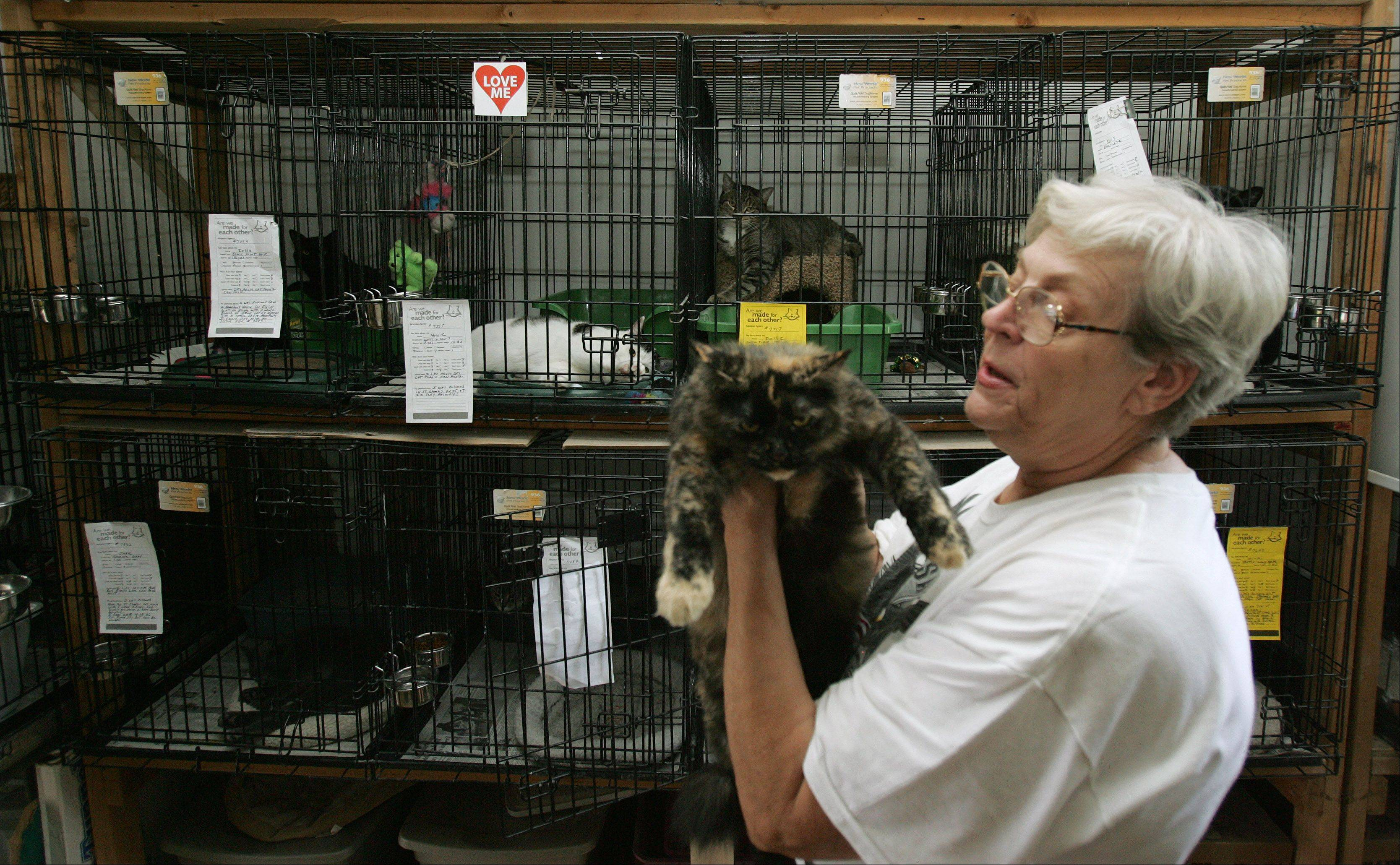 Carol Schultz of South Elgin has been rescuing abandoned cats for 30 years in South Elgin and keeping them in her converted garage. Last year the village's code enforcement officers told her she had to comply with the ordinance banning animal shelters from residential areas. She is due in South Elgin court next month.