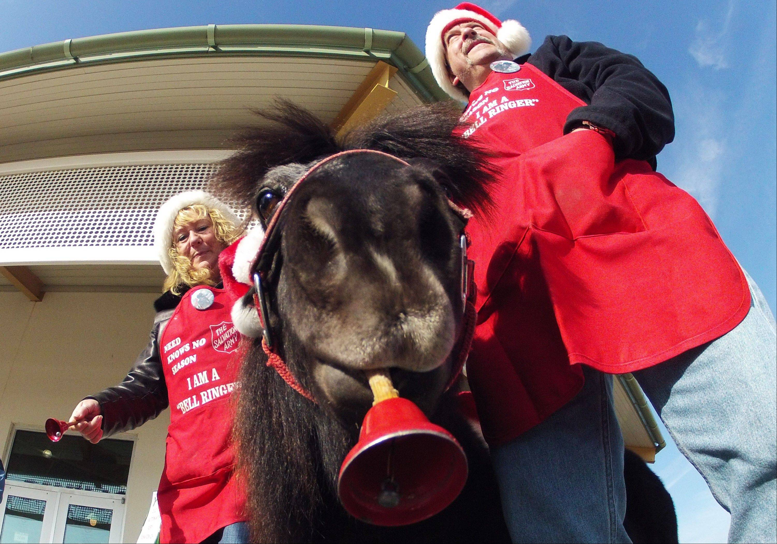 Tinker, a miniature horse, rings a red bell for the Salvation Army outside a craft fair Nov. 17 in West Bend, Wis., with his owners, Carol and Joe Takacs.