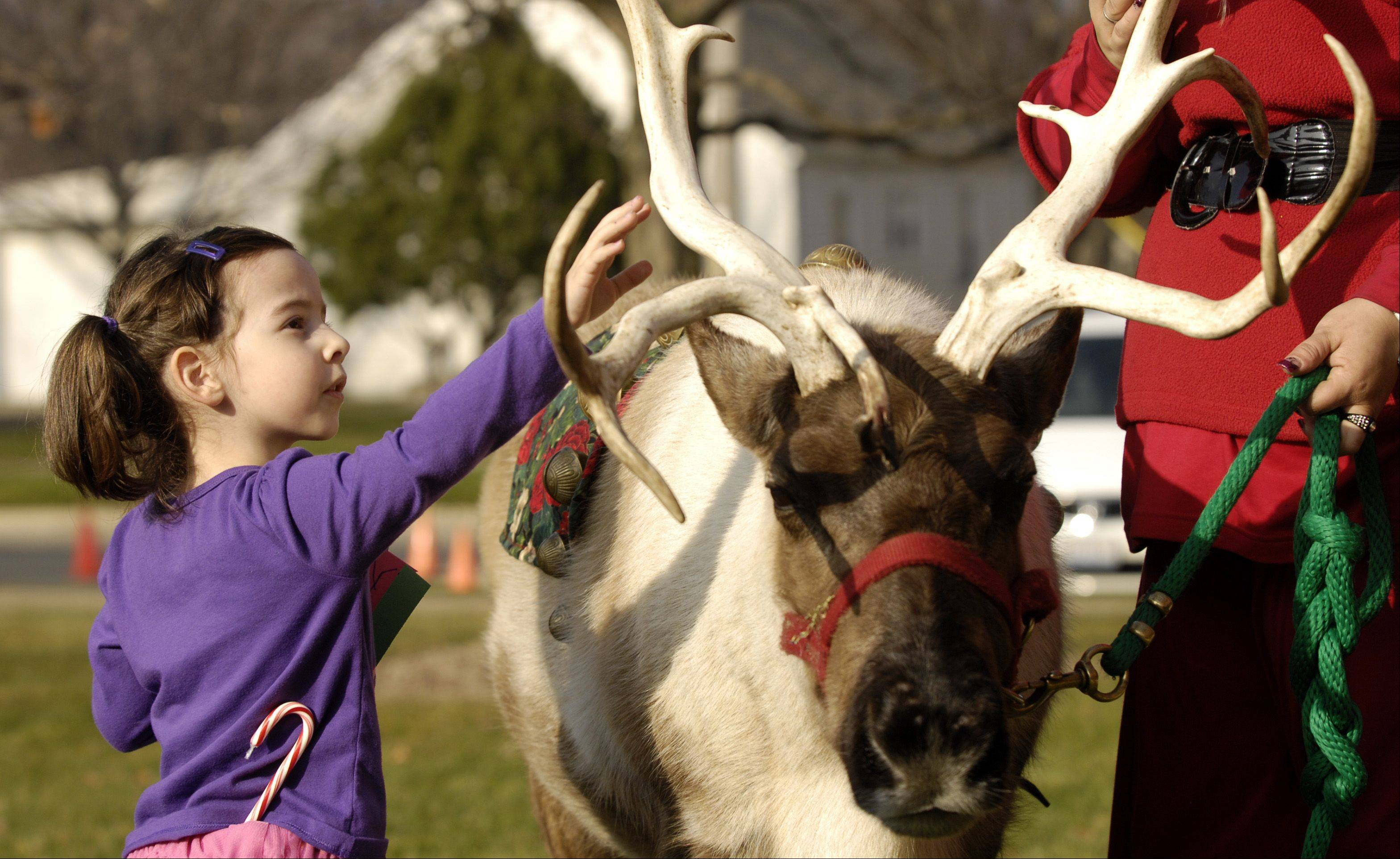 Ruby McCowan, 4, of Joliet, pets a reindeer during Lisle's Once Upon a Christmas celebration Sunday at Lisle Station Park.