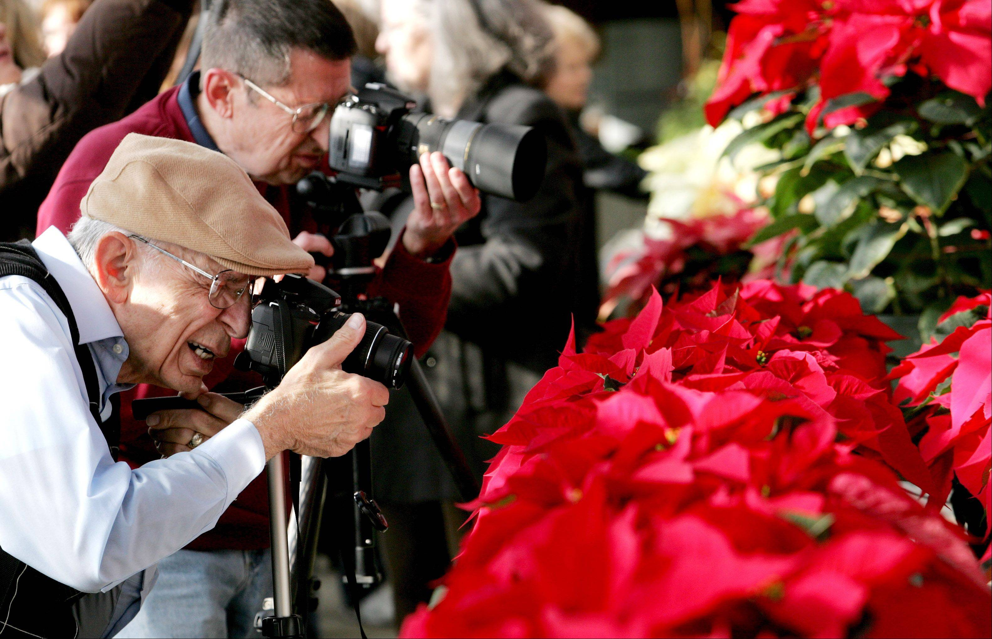 Rock Assise, left, and Tom Walter, right, both members of a camera club in Crest Hill, work on getting some close-ups of the prestige red poinsettia, during their visit to the annual Shades of Crimson display in the greenhouse at Cantigny Park in Wheaton on Tuesday.