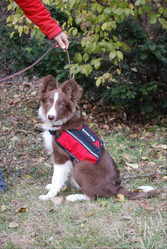 how to become a service dog trainer online