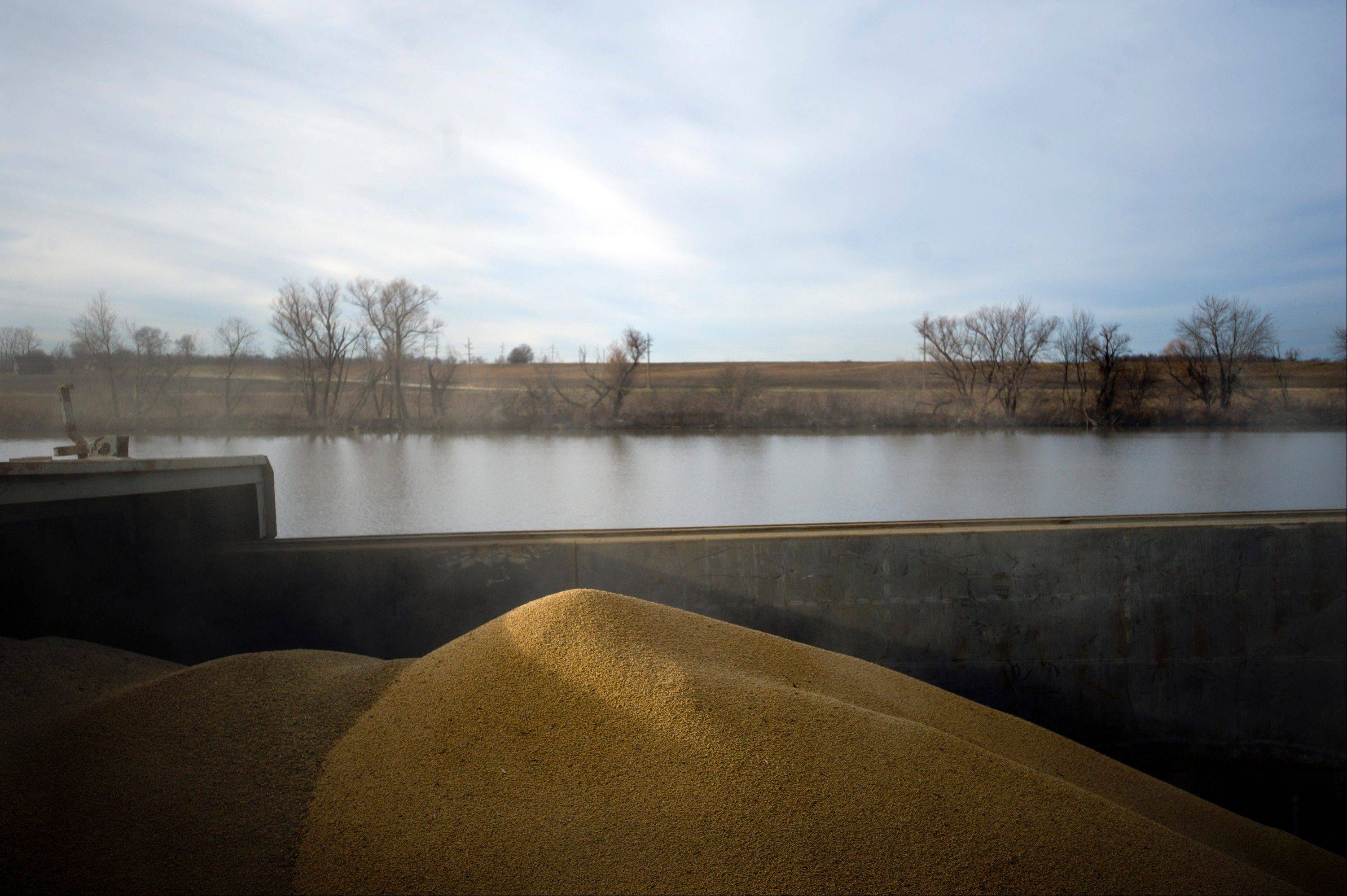Soybeans sit in a barge on the Kaskaskia River, a tributary of the Mississippi River, at Gateway FS in Evansville, Ill., on Wednesday. U.S. farmers, facing aftershocks of the worst drought in 50 years, are improvising alternative plans for corn, soybeans and other grains that won�t be moving to world markets as the Mississippi River dries up.