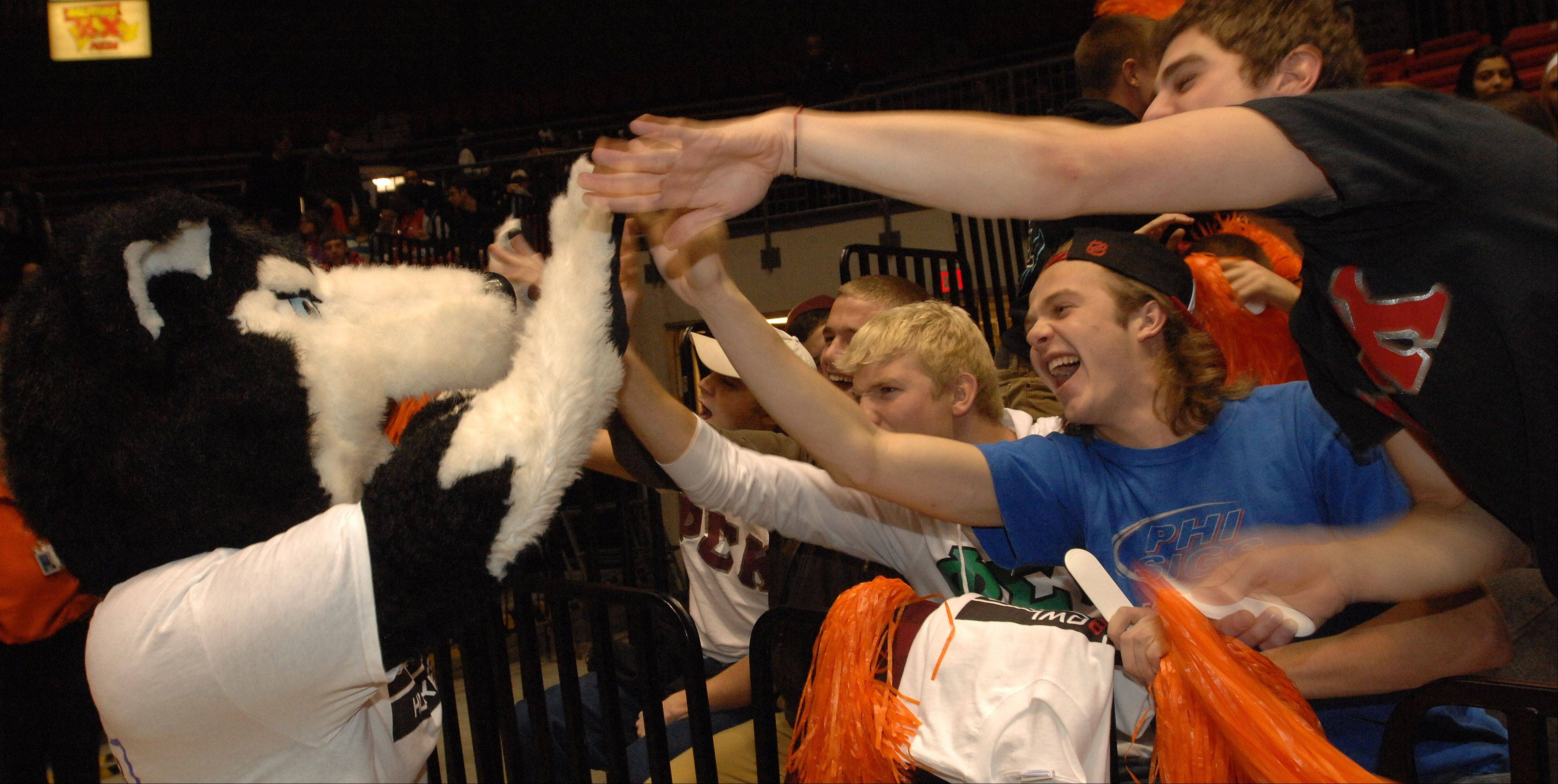 NIU Husky fans give the school a mascot a high-five during an Orange Bowl pep rally held as part of a NIU basketball game on Wednesday evening.