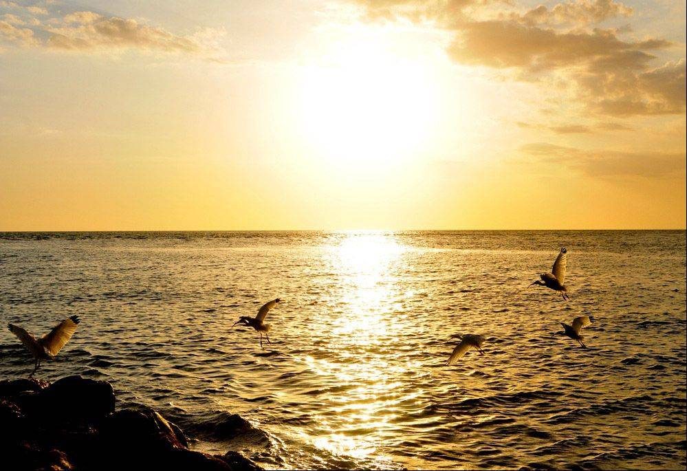 Several sea birds take to flight as the sun sets in Cozumel, Mexico in 2011.