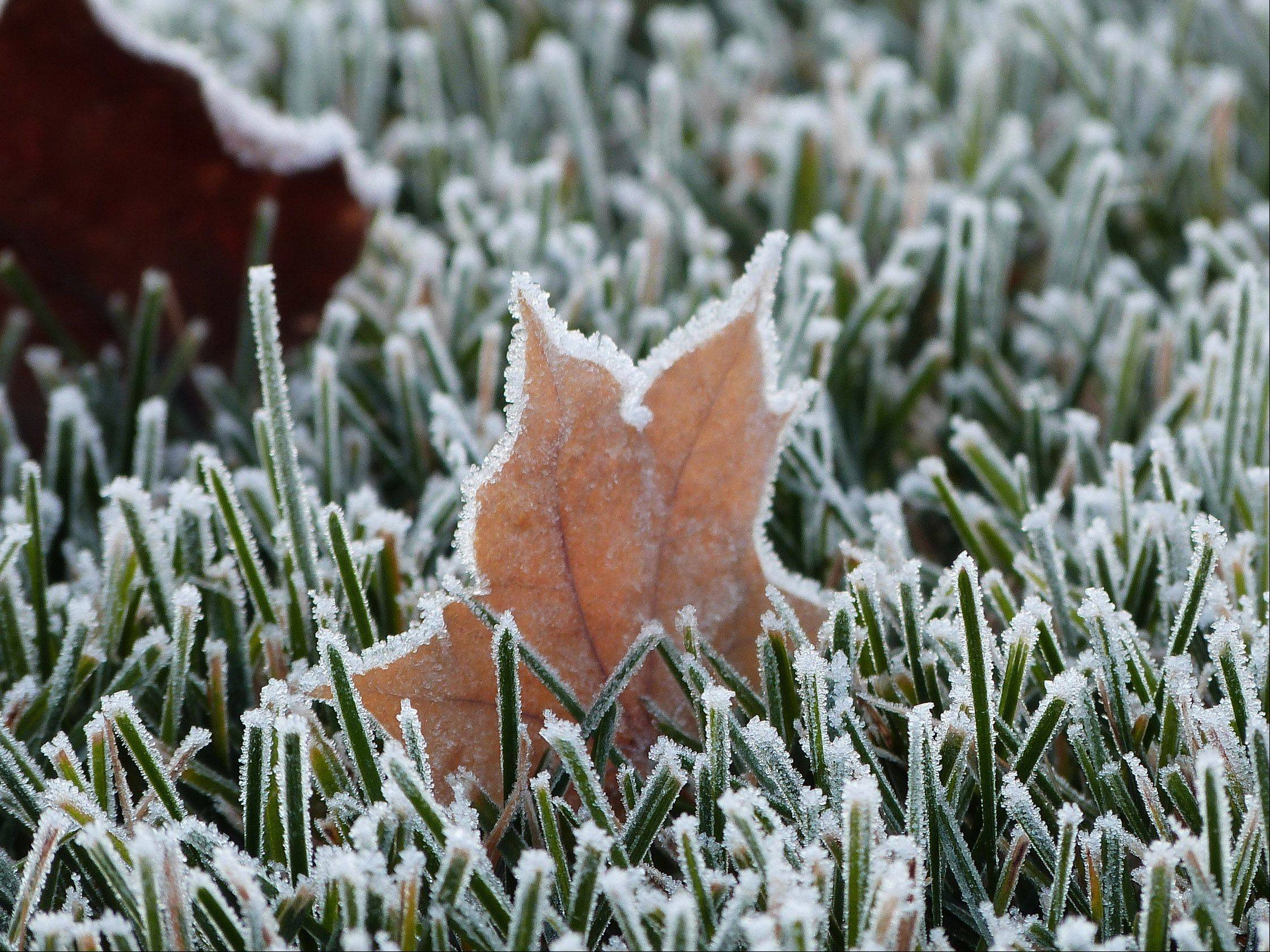 Frost covers blades of grass and the edges of maple leaves early one morning in Wheeling several weeks ago.