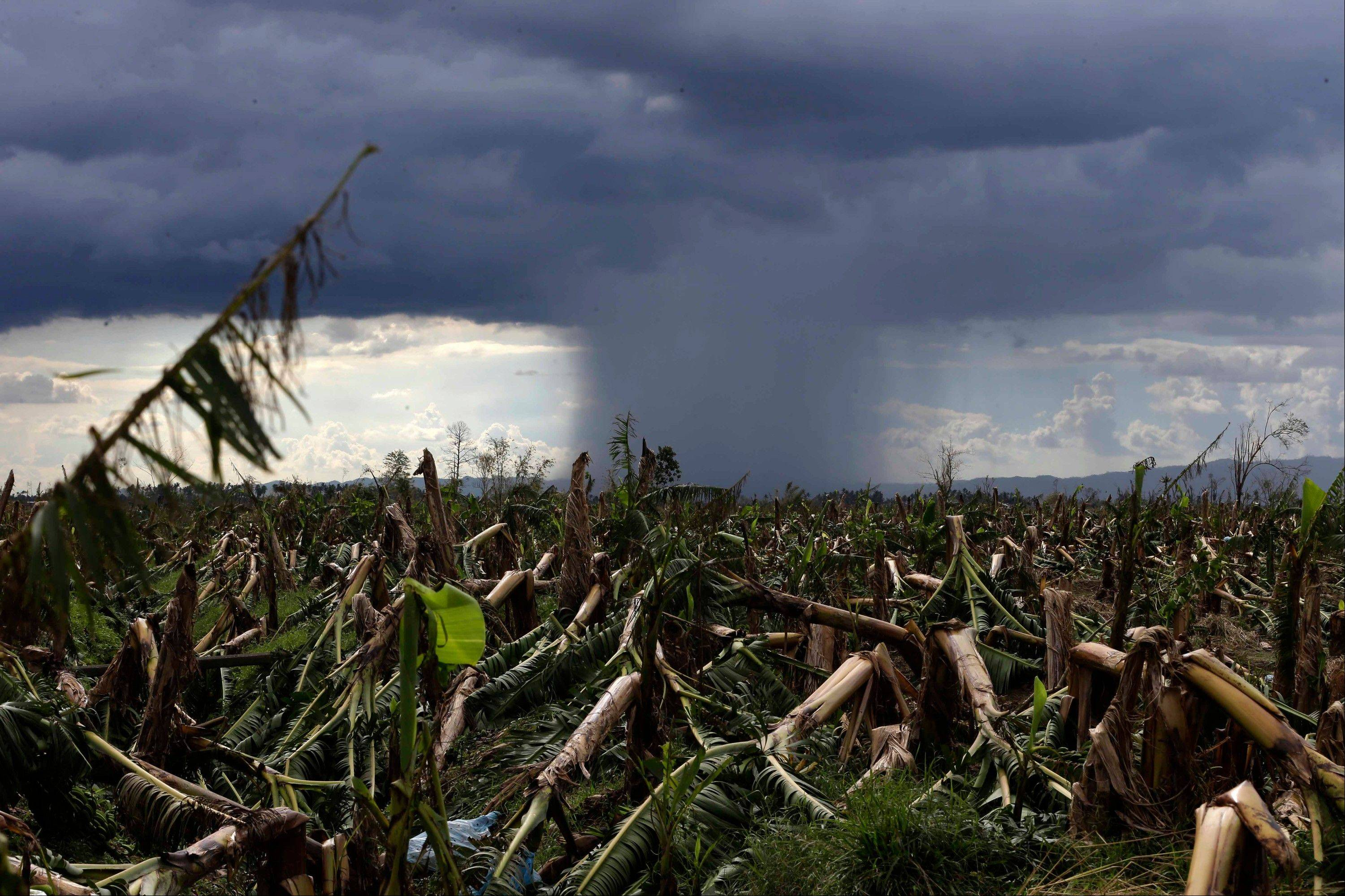 A rare cloud formation is seen amidst a destroyed banana plantation, four days after typhoon Bopha left hundreds dead and rendered extensive damage to agriculture in southern Philippines.
