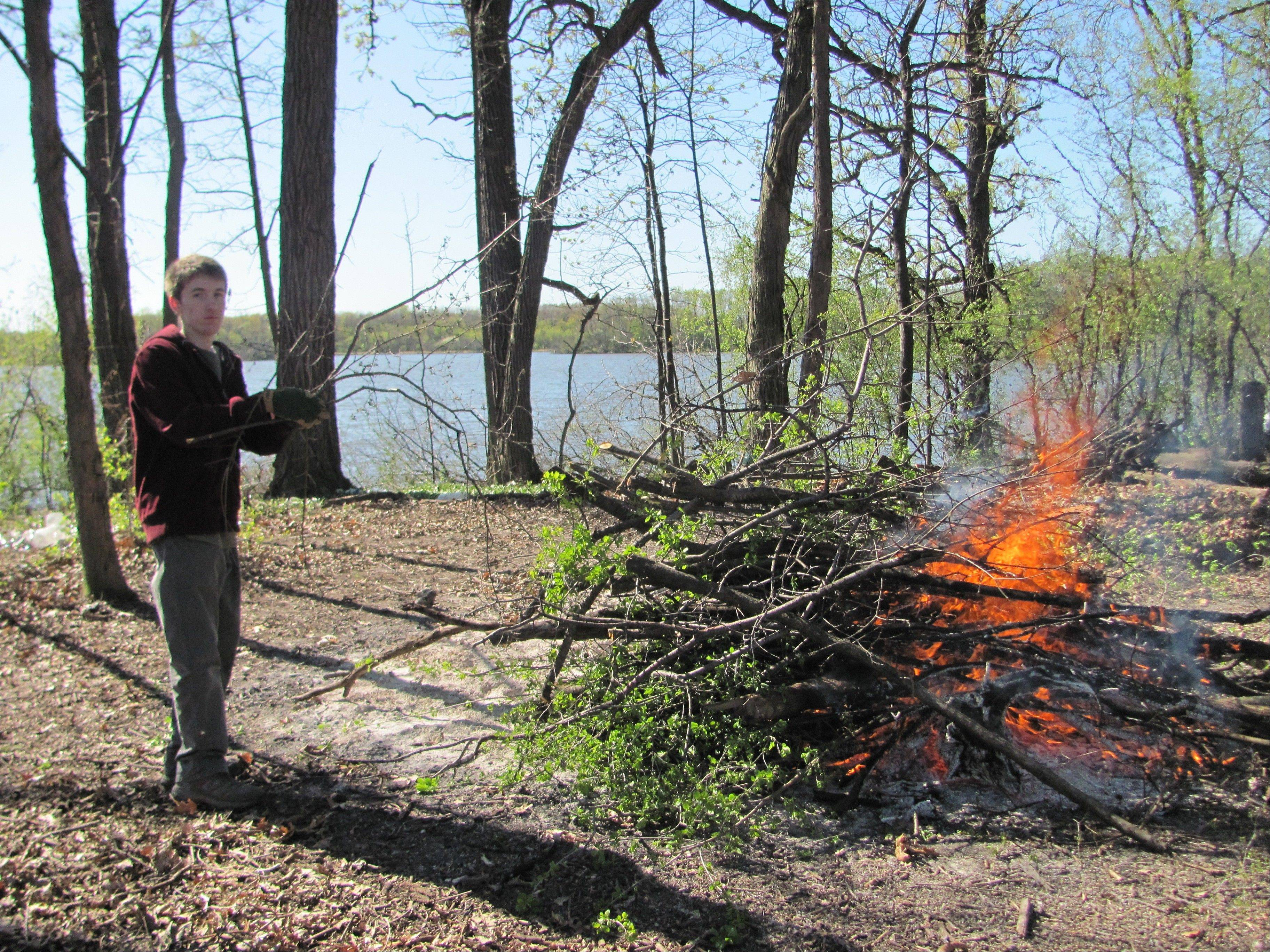 Boy Scout Mark Rapala toss buckthorn into a fire while cleaning the invasive brush from a one-acre island in Busse Woods.