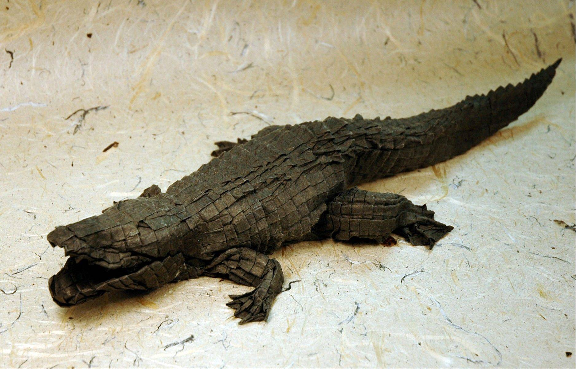 An origami model of an alligator designed by Micheal G. LaFosse is 18 inches long.