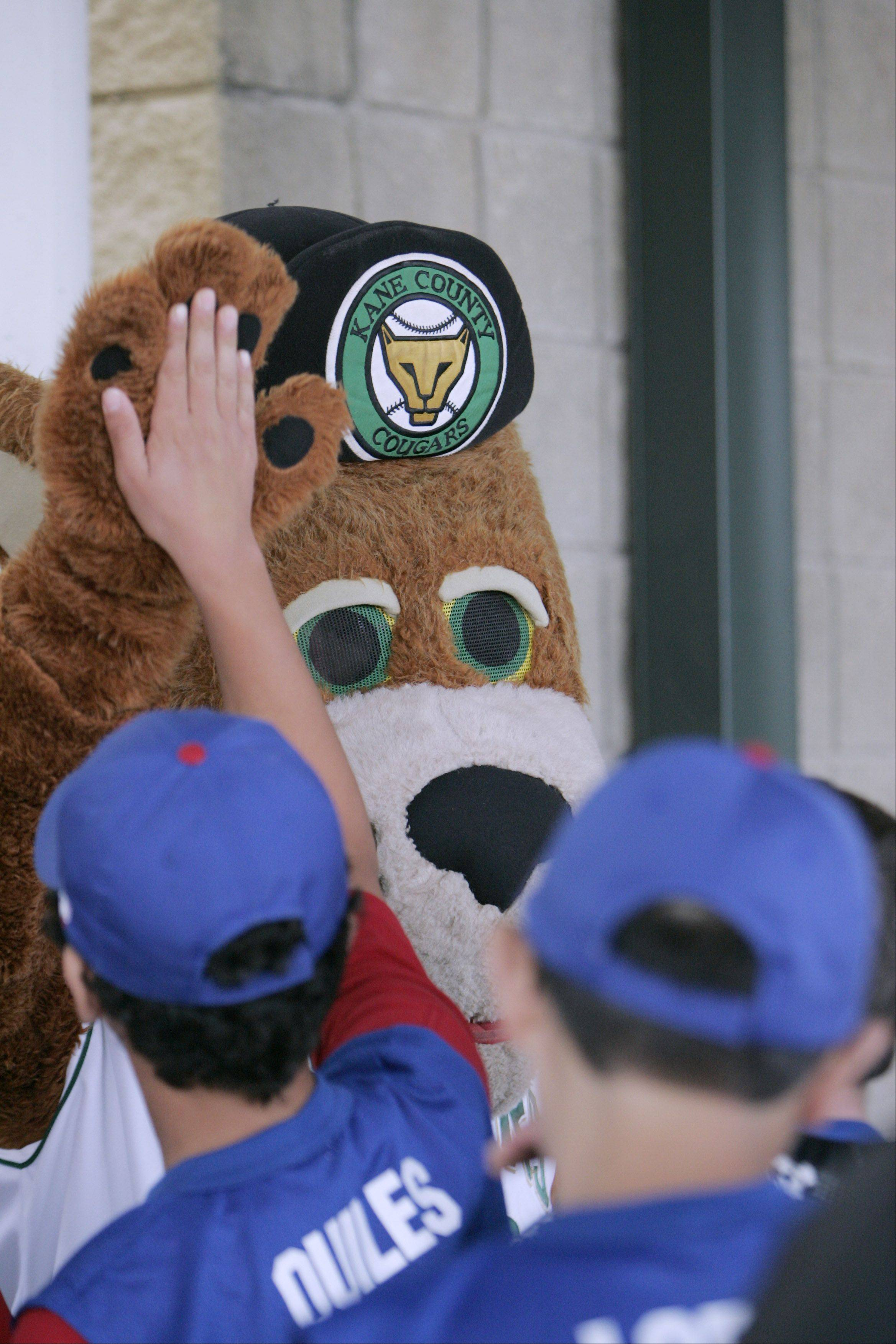 Fans are invited to visit Fifth Third Ballpark this Saturday, Dec. 15, when the Kane County Cougars hold a meet and greet with Ozzie T. Cougar and Santa Claus.