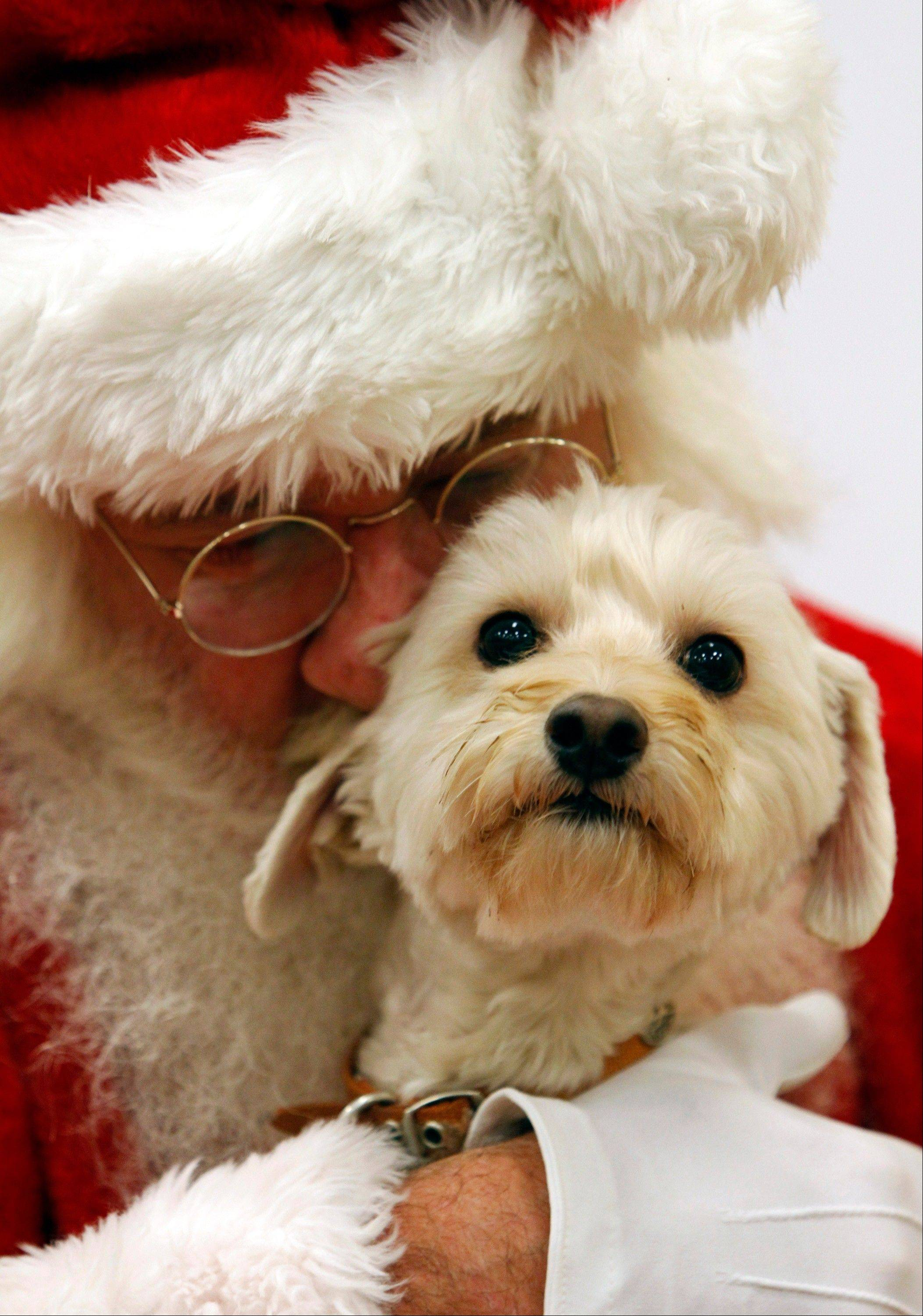 Bentley held by Santa Claus for a photo at the PetSmart Santa Claws photo event in Fort Worth, Texas. A holiday present for Fido or Fluffy used to be an extra table scrap or a new squeeze toy. But as with gifts for their human counterparts, pet presents are becoming increasingly high-tech.