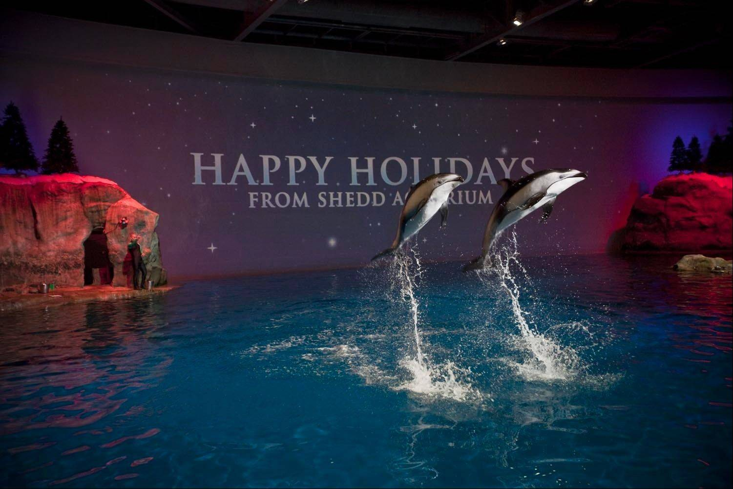 "The Shedd Aquarium's themed, multispecies aquatic show ""A Holiday Fantasea"" runs through Jan. 5 in Chicago."