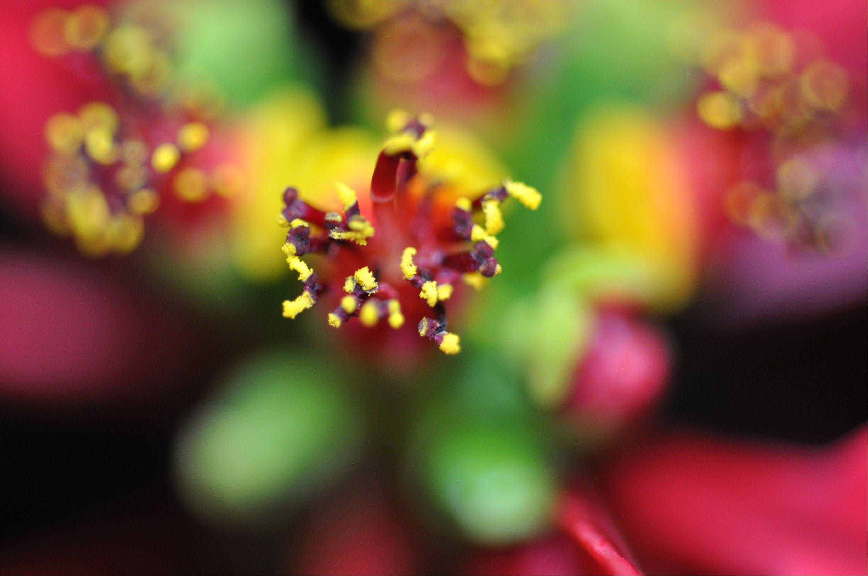 This is a poinsettia as seen through a macro lens.