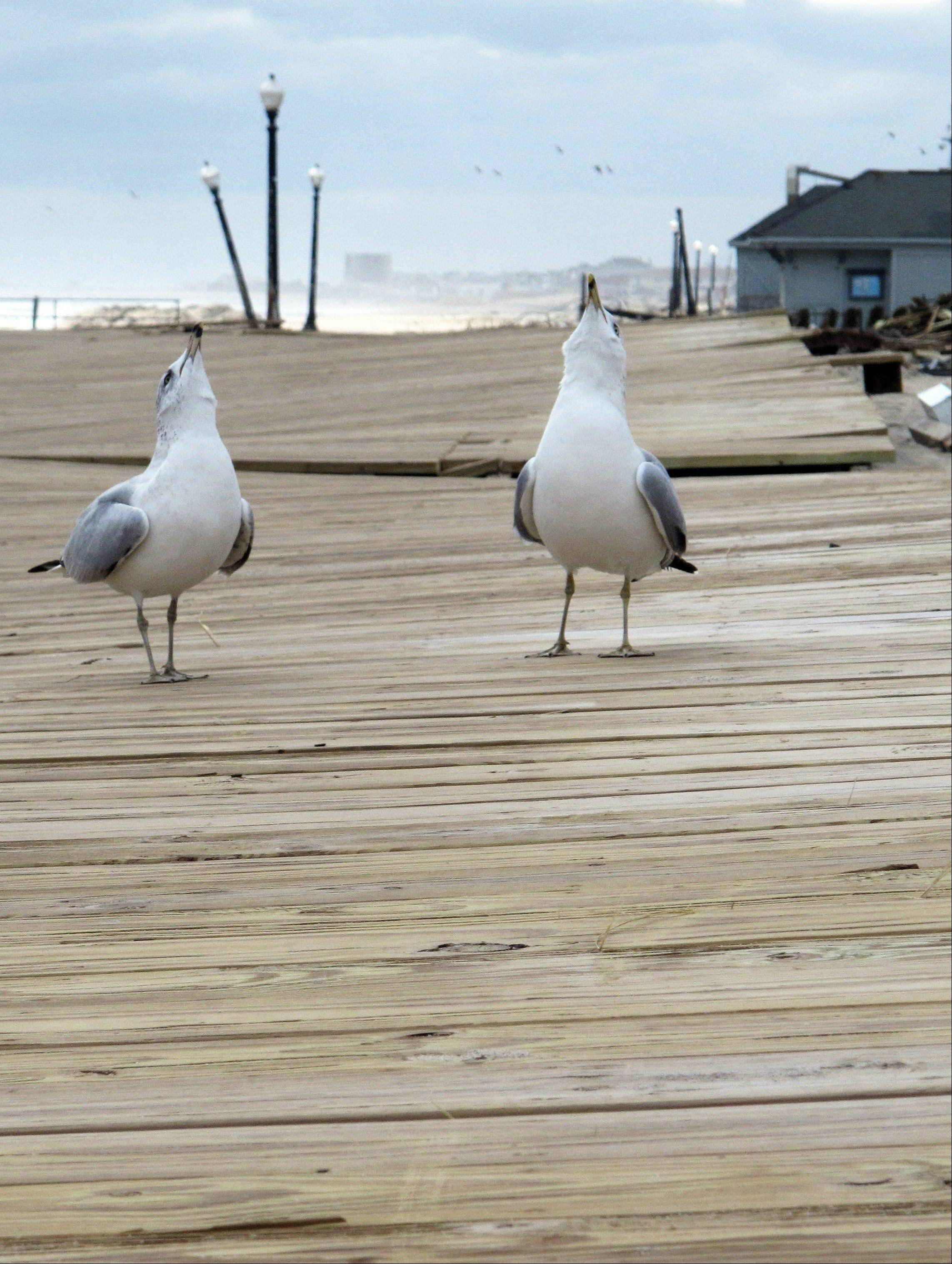 Seagulls screech on the boardwalk in Ocean Grove, N.J. The boardwalk was warped and cracked by Superstorm Sandy. Coastal towns are racing to repair their boardwalks in time for next summer.