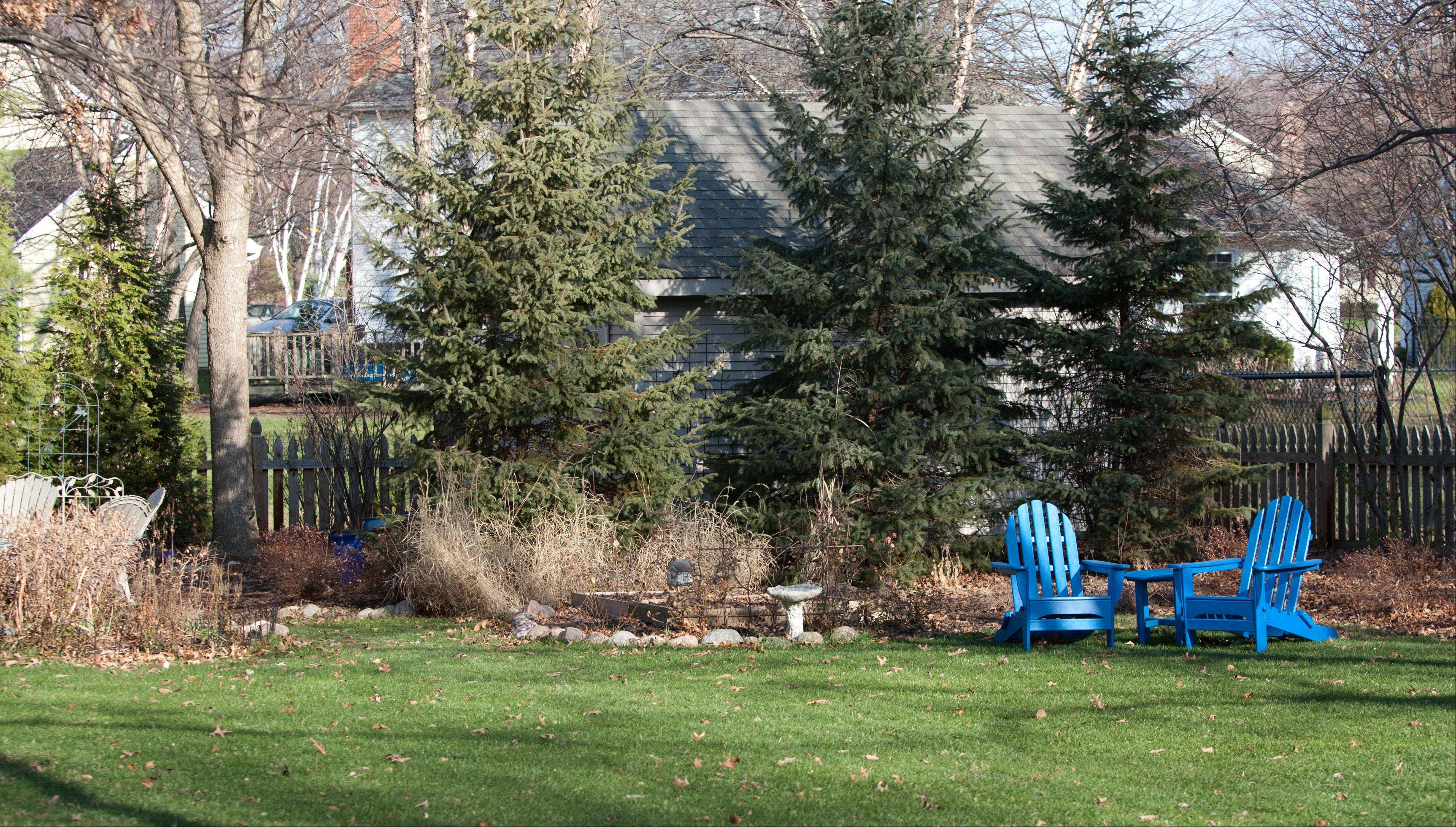 With a goal of creating a wild area in the back yard, with curved lines and focal points for interest, Laura Christensen transformed her Wheaton landscape. These blue chairs stand out all year long, but provide a strong pop of color against a snowy winter landscape.