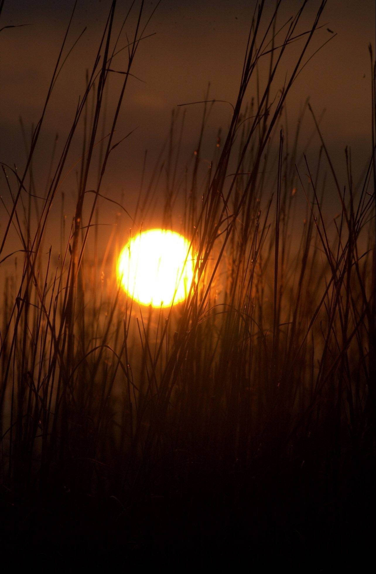 Tall grass in the Exner Marsh is lit by the setting sun over Lake in the Hills as the longest night of the year, the winter solstice, approaches.