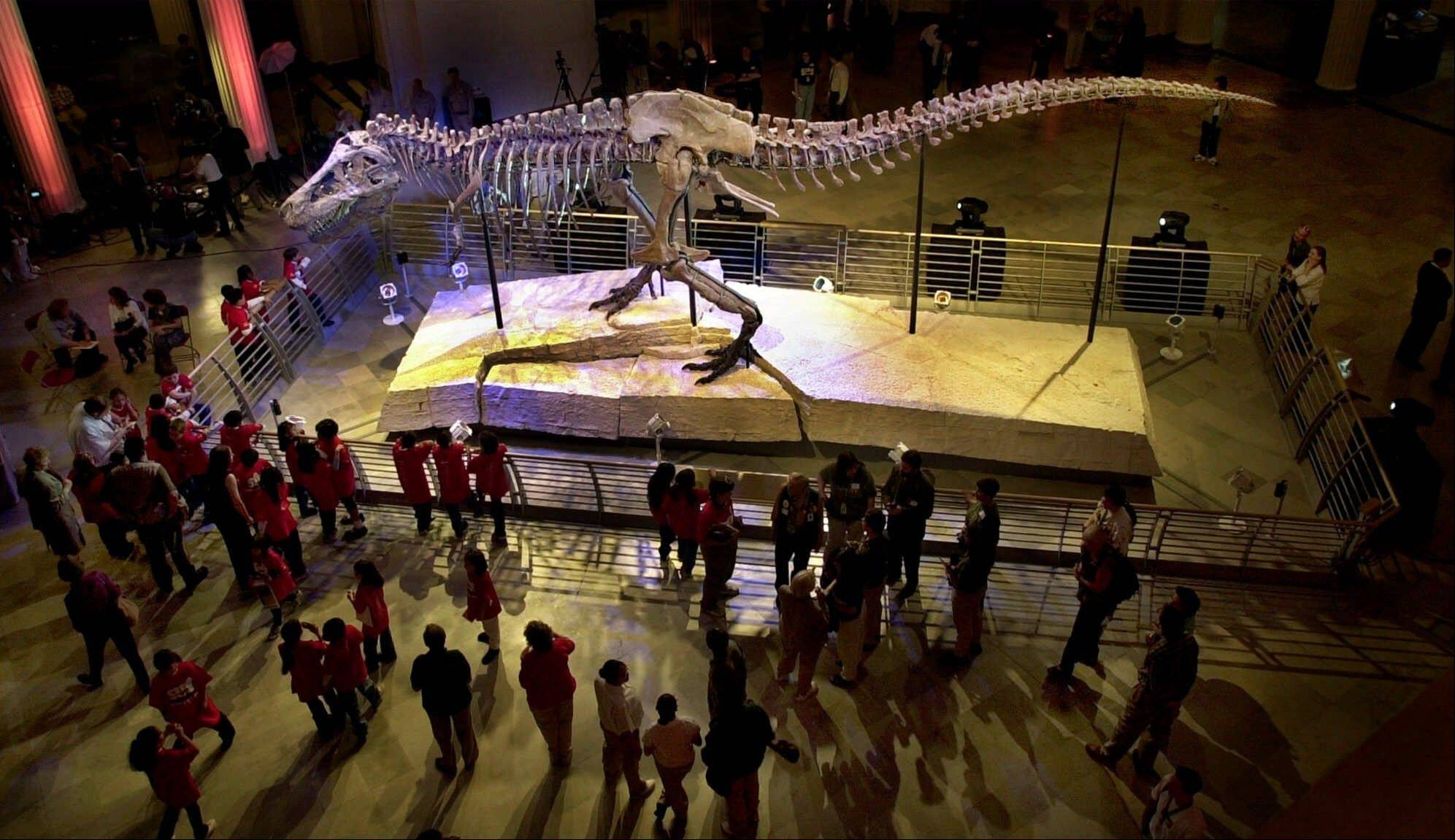 This May 17, 2000, photo shows Sue, the largest and most complete Tyrannosaurus rex skeleton ever found, on display at the Field Museum of Natural History in Chicago. The museum has announced plans to cut staff, overhaul operations and limit the scope of its research because of a high debt load and recession.