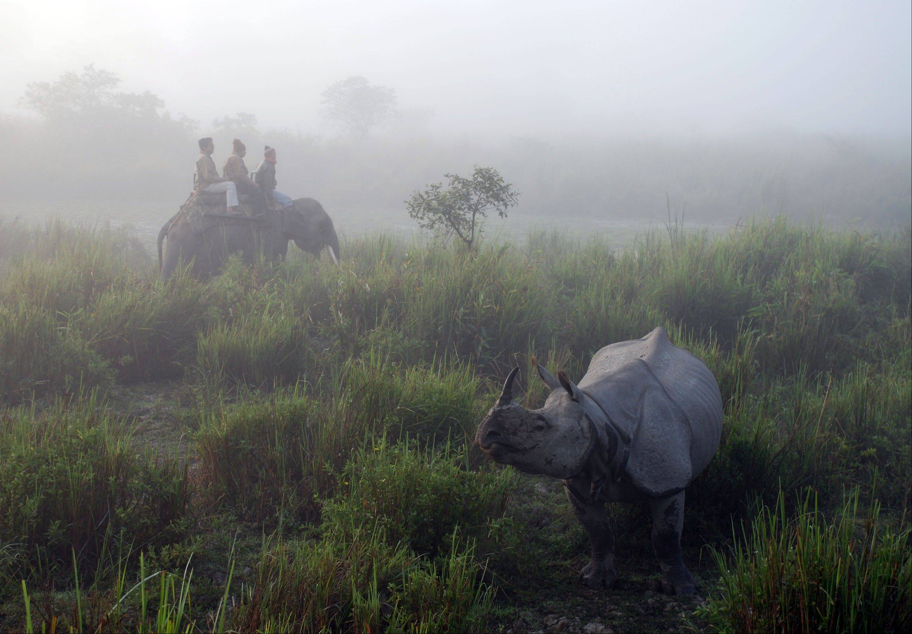 Tourists at the Kaziranga National Park take an early morning ride to view one-horned Indian rhinos in the mist in Assam's tea country in Kaziranga, India. Elephants, monkeys and other wild animals often wander through the tea estates.