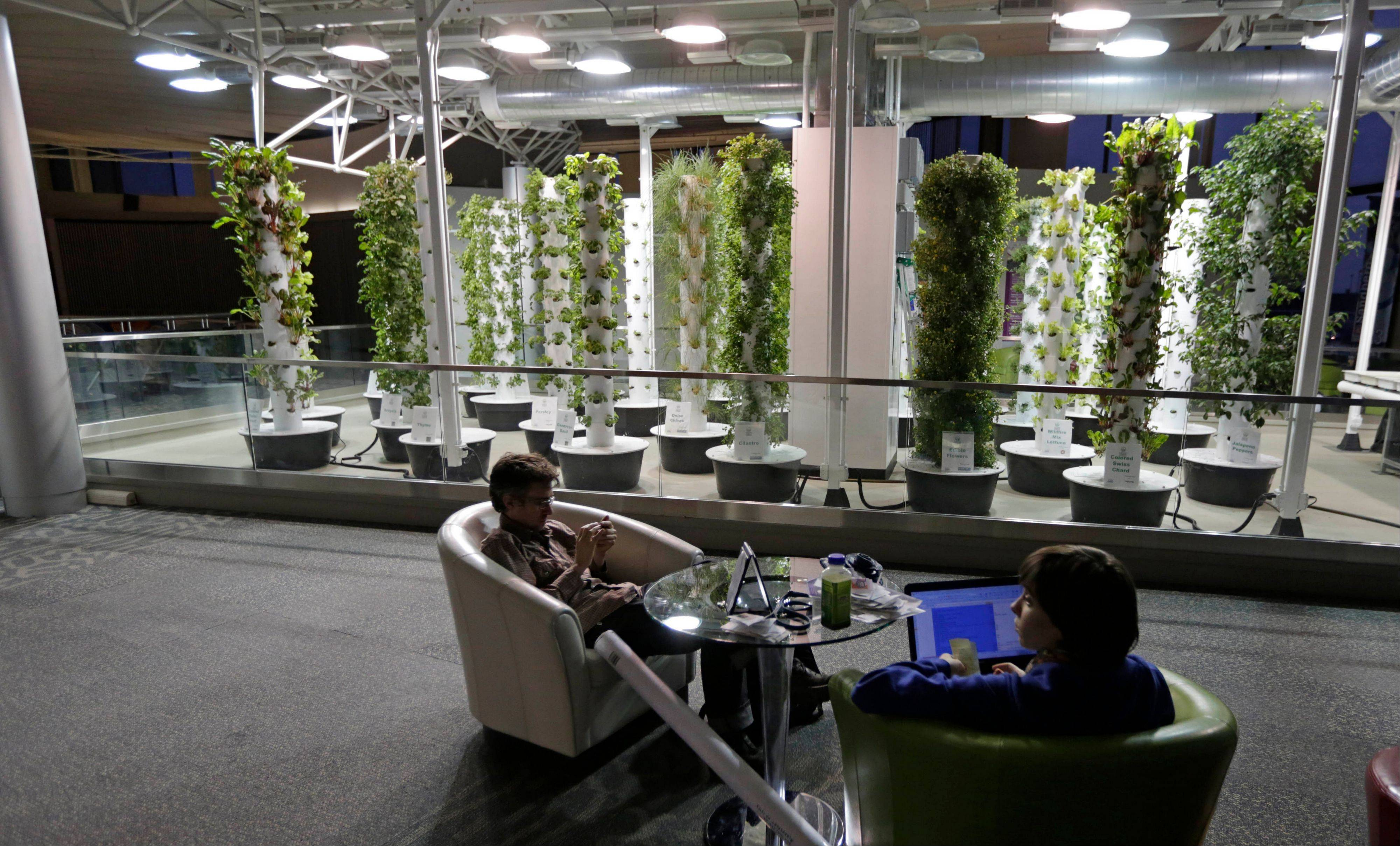 In this photo taken Tuesday, Dec. 18, 2012, at O'Hare International Airport in Chicago, travelers David Janesko and Tess Menotti relax between flights next to O'Hare's Urban Garden where fresh herbs are grown and used in airport restaurants.