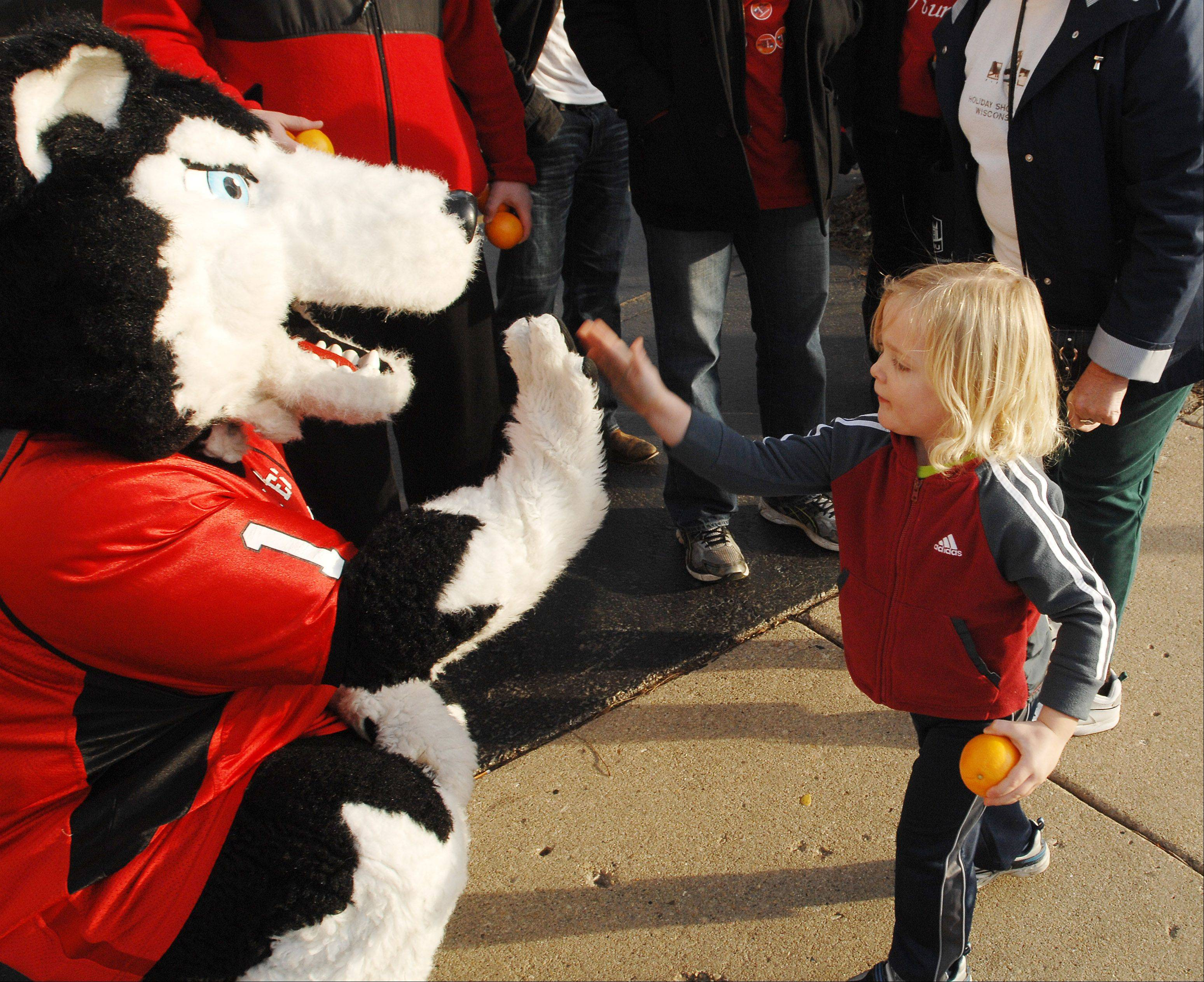Noah Strandberg, 3, of Warrenville gets a high-five from mascot Victor E. Huskie. A group of Northern Illinois University students, along with mascot Victor E. Huskie were in Naperville Friday. They were promoting the team�s trip to the Orange Bowl and handing out oranges to fans. They handed out almost 1800 oranges throughout the day.
