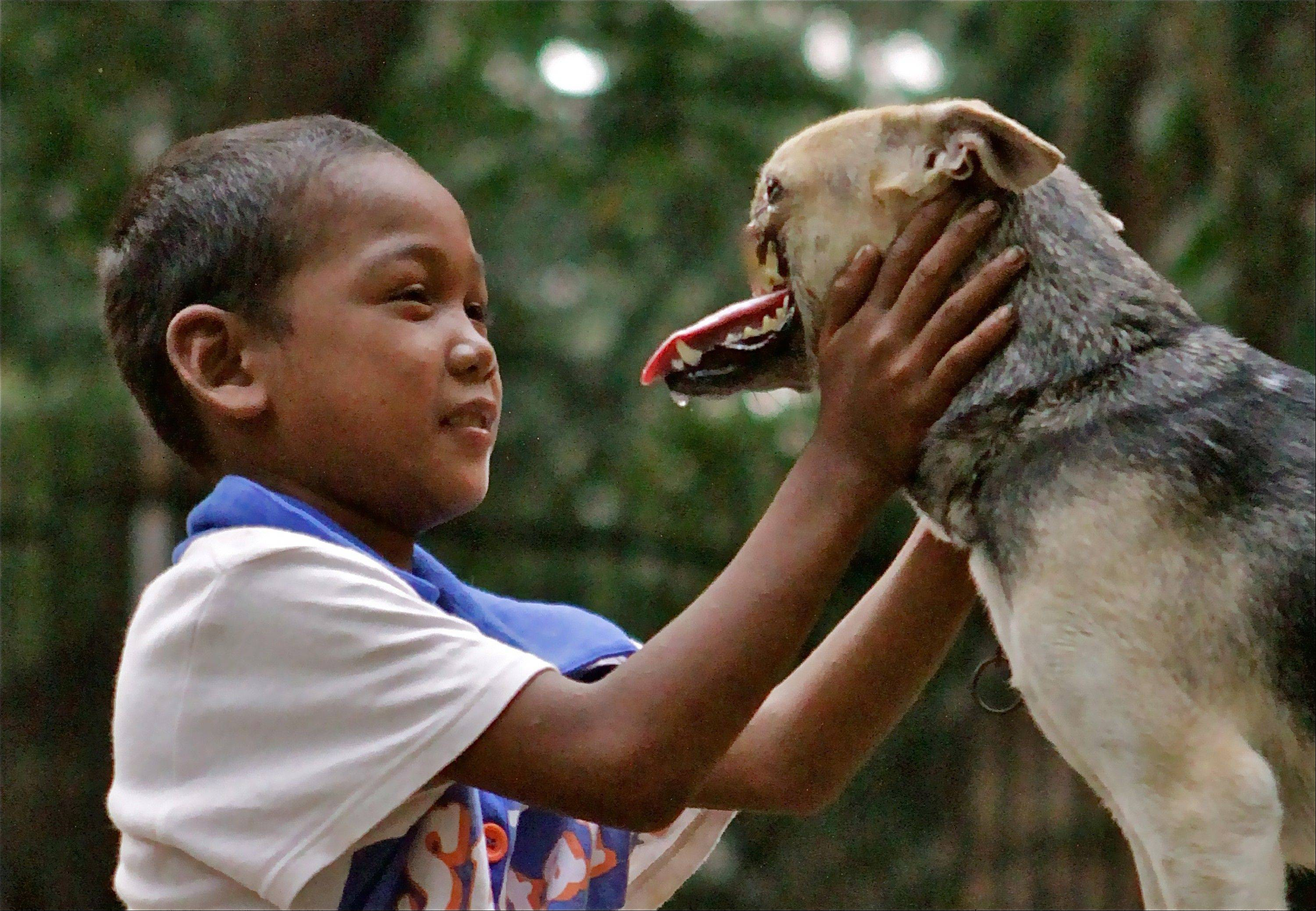 A Bunggal family member plays with Kabang the dog in the Philippines. A veterinarian at the University of California, Davis, has some good news about a dog from the Philippines who became an international hero after sacrificing its snout to save two young girls. Veterinarian Gina Davis says the dog named Kabang appears to have beaten the cancer it was suffering from.