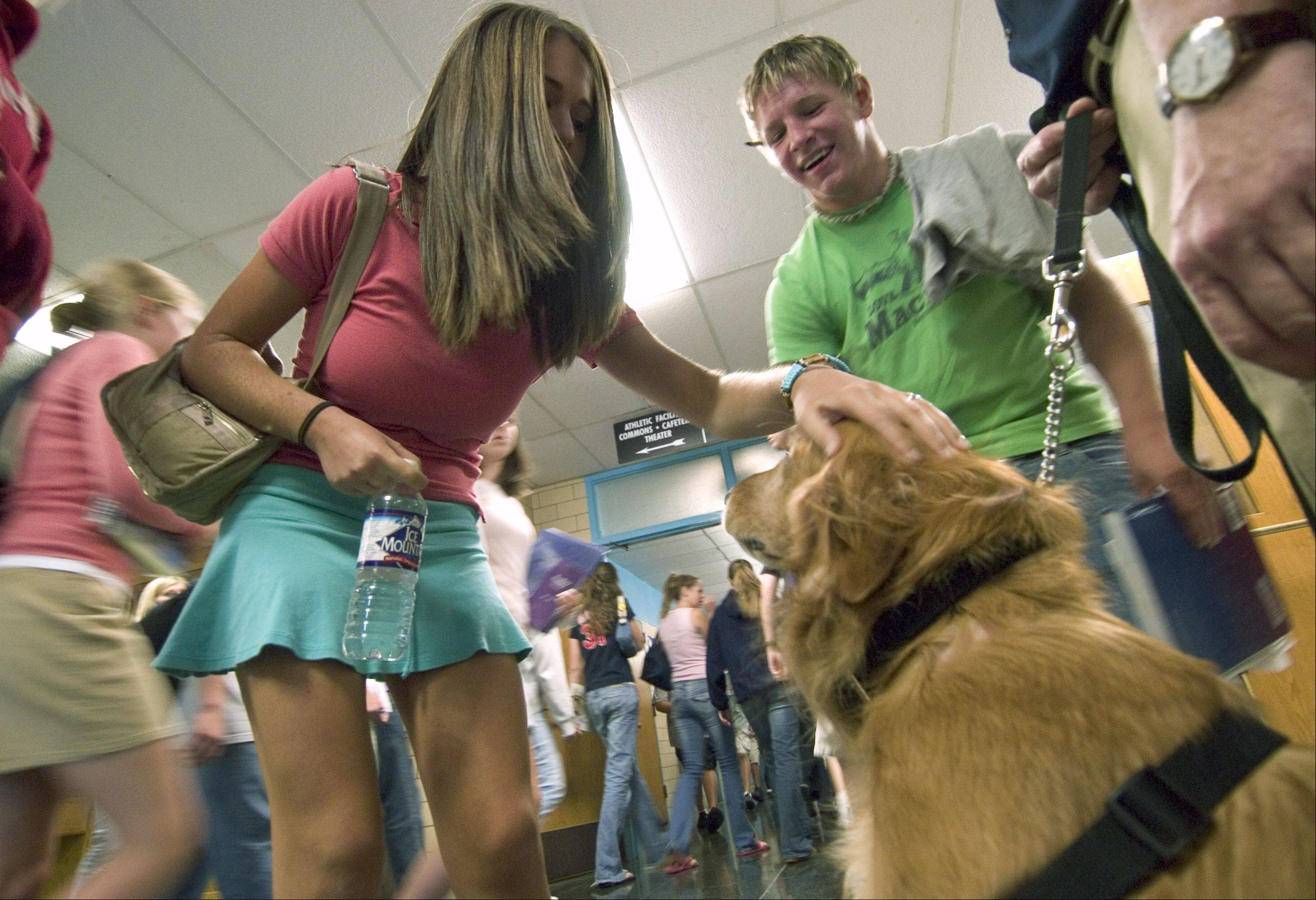 phsdog_5ne090804BZ Photo0346795 dit 04-2353 BILL ZARS PHOTO ///// Dandy, a drug and alcohol sniffing dog, is a hit with the students between classes Prospect High School.