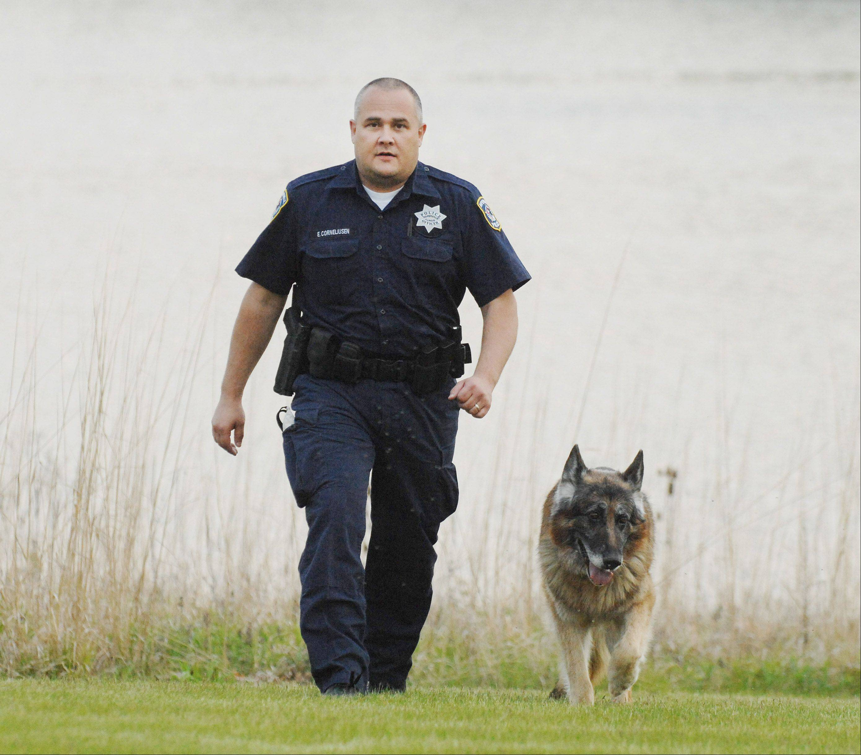 Naperville police officer Eddie Corneliusen and his partner, Kairo, on a walk. The 11-year-old Kairo retired this year.