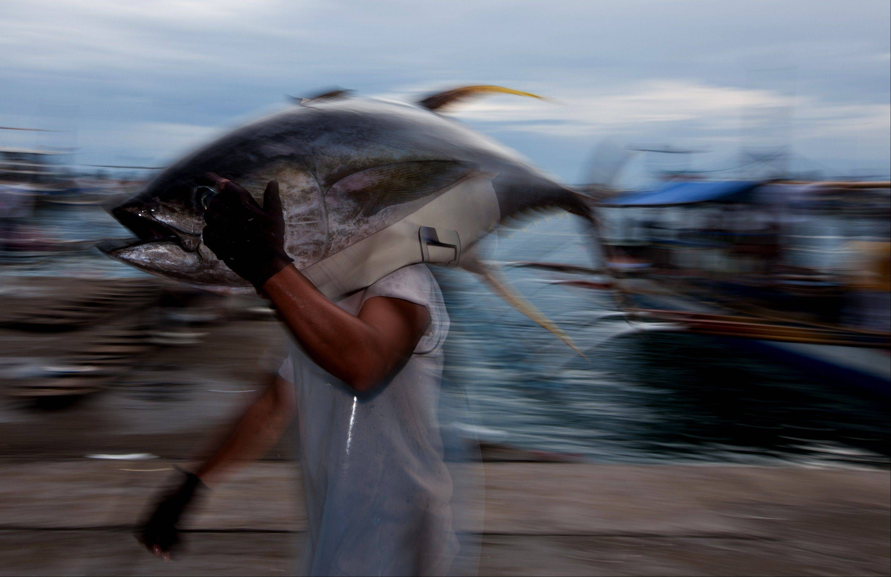A fish porter carries a fresh tuna at the General Santos Fish Port Complex in General Santos, the Philippines, on Monday, Jan. 23, 2012. Philippine exports will probably rise by 10 percent or more this year after a decline in 2011, trade secretary Gregory Domingo told reporters Jan. 16.