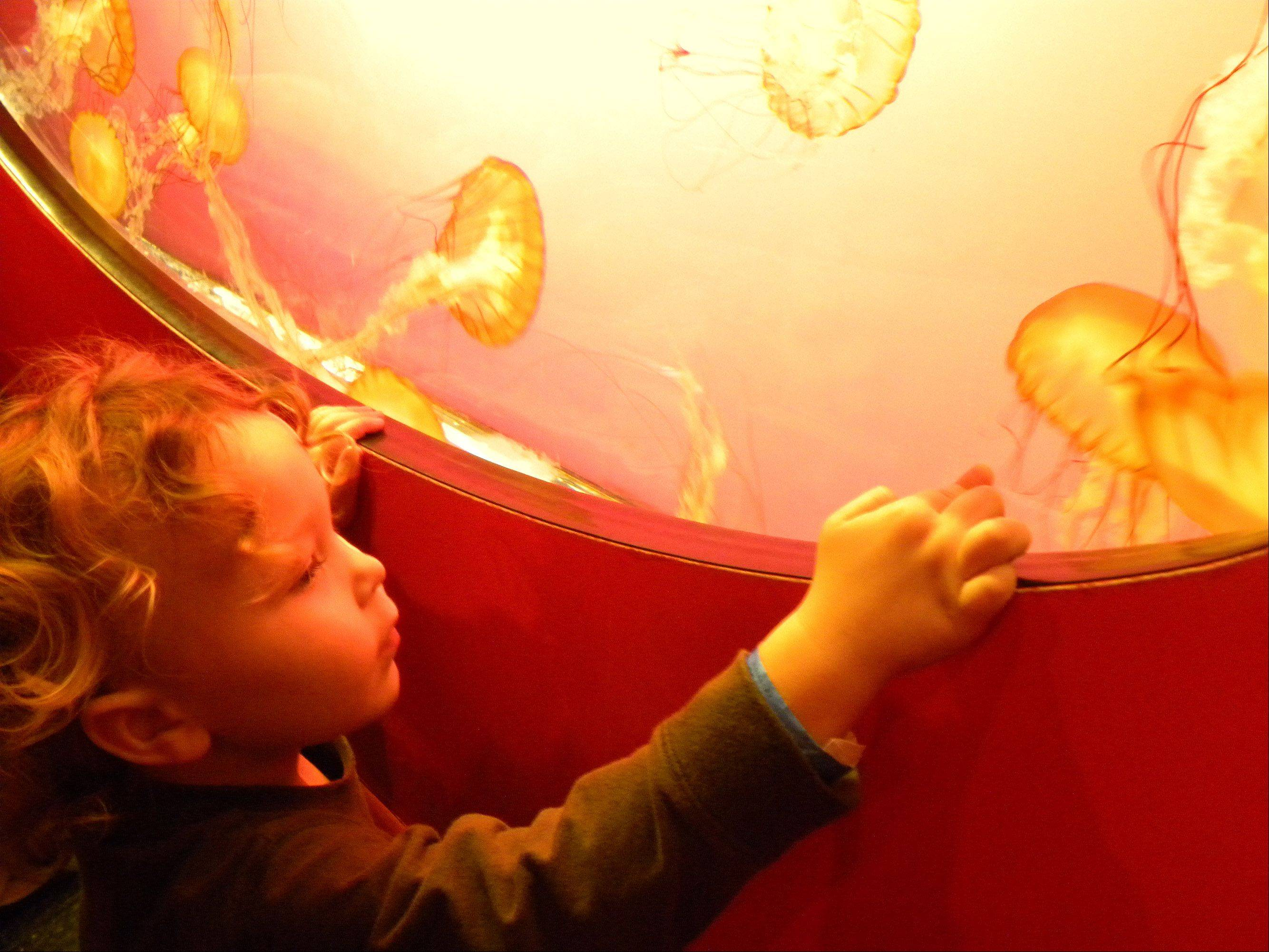 This is my nephew, Nathan, at the Shedd Aquarium on December 15th. We went to see the jelly fish.