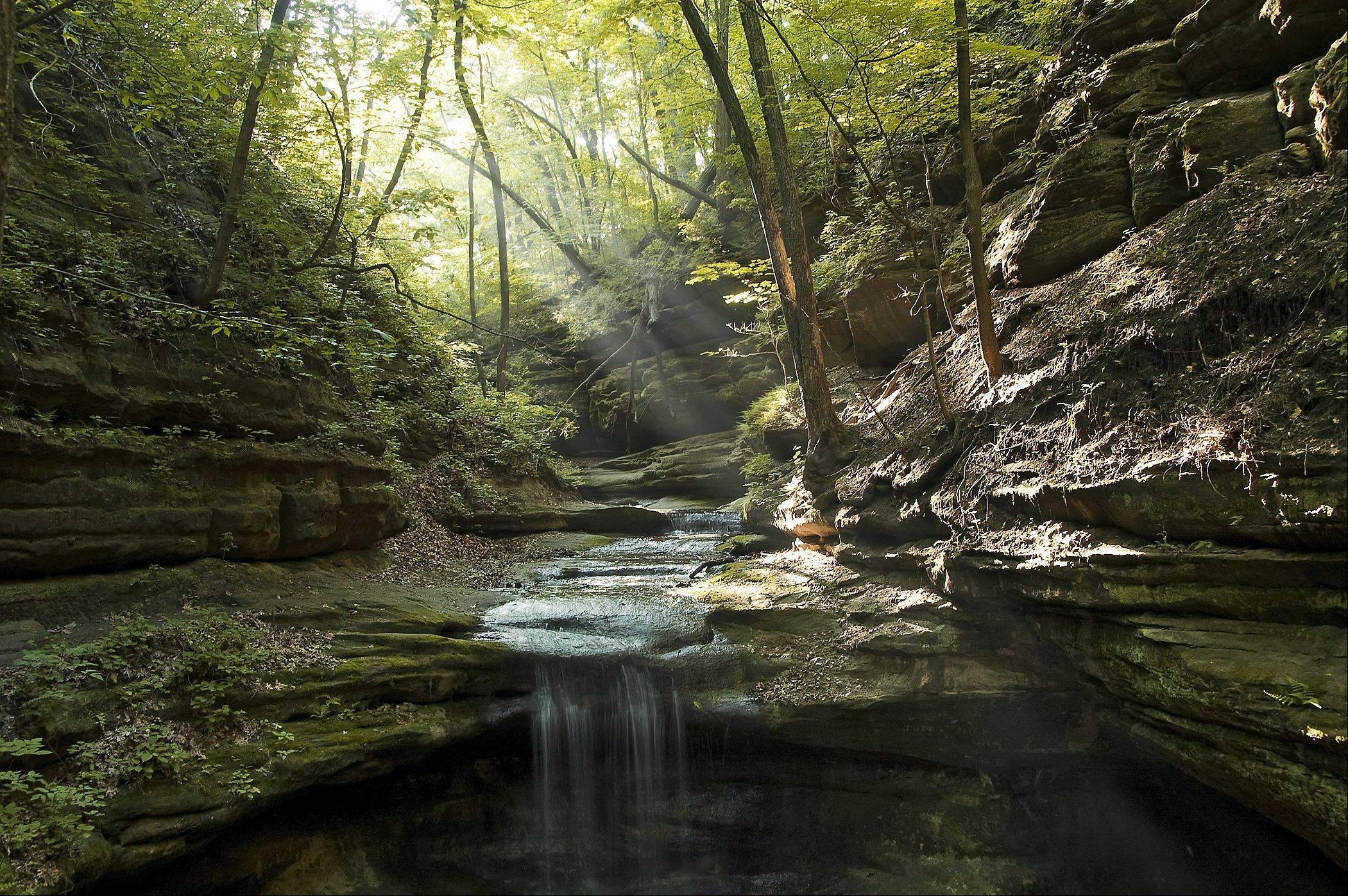 A photo taken in May of lady year while visiting Matthiessen State Park. Heavy rains had fallen the day previous to my visit. Mild temperature calm winds and the presence of ground fog combined with damp shady moss laden sandstone walls to produce a scene so tranquil that I didn't want to leave. The fog captured the light beams and the waterfall was soothing to the ears. Just an outright perfect scene