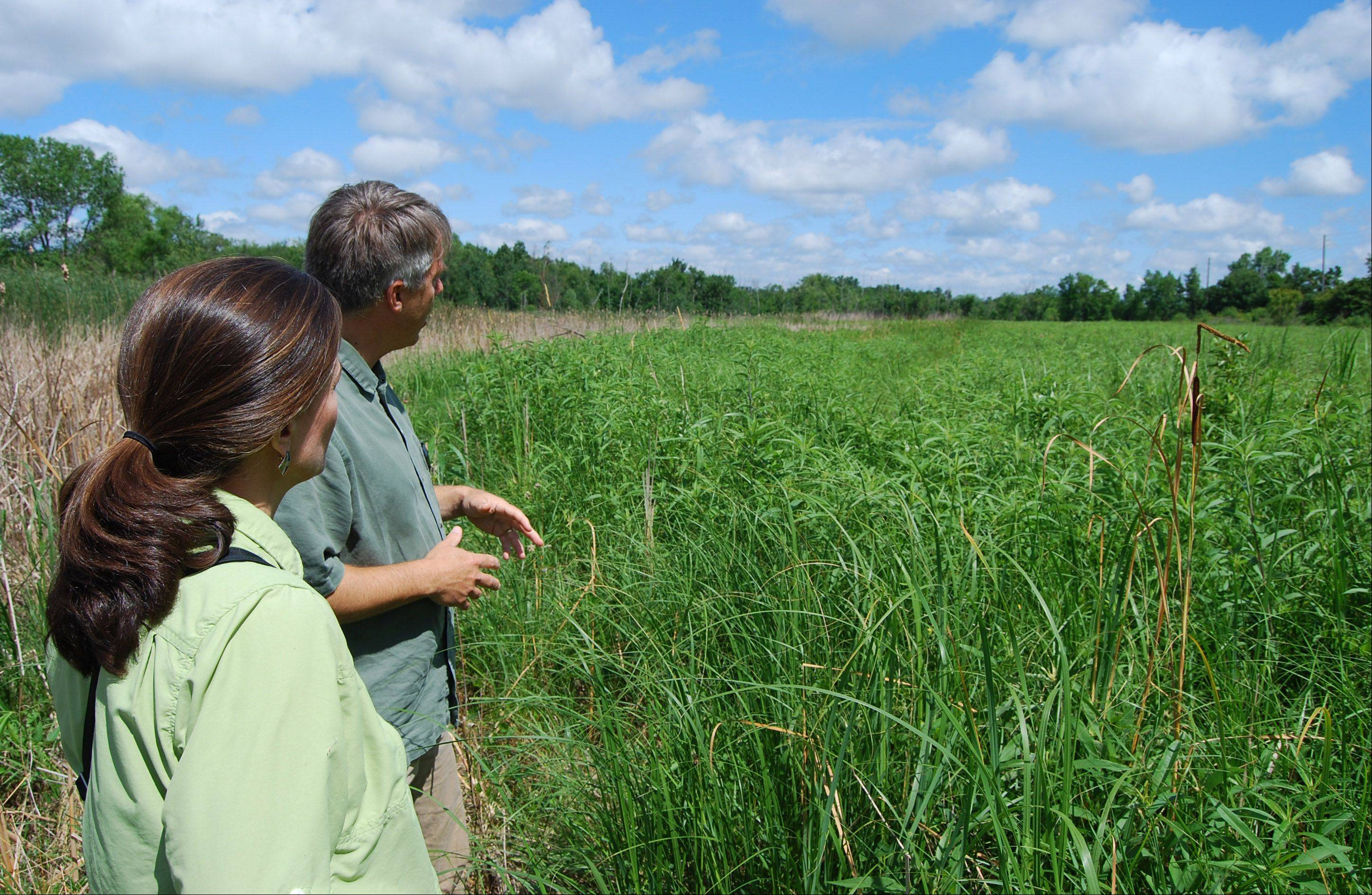 Steve Barg, executive director of Conserve Lake County shows Lois Morrison some of the unique aspects of the Dokum Mskoda Nature Preserve in Waukegan. It was one of several important Lake County parcels receiving permanent protection in 2012.