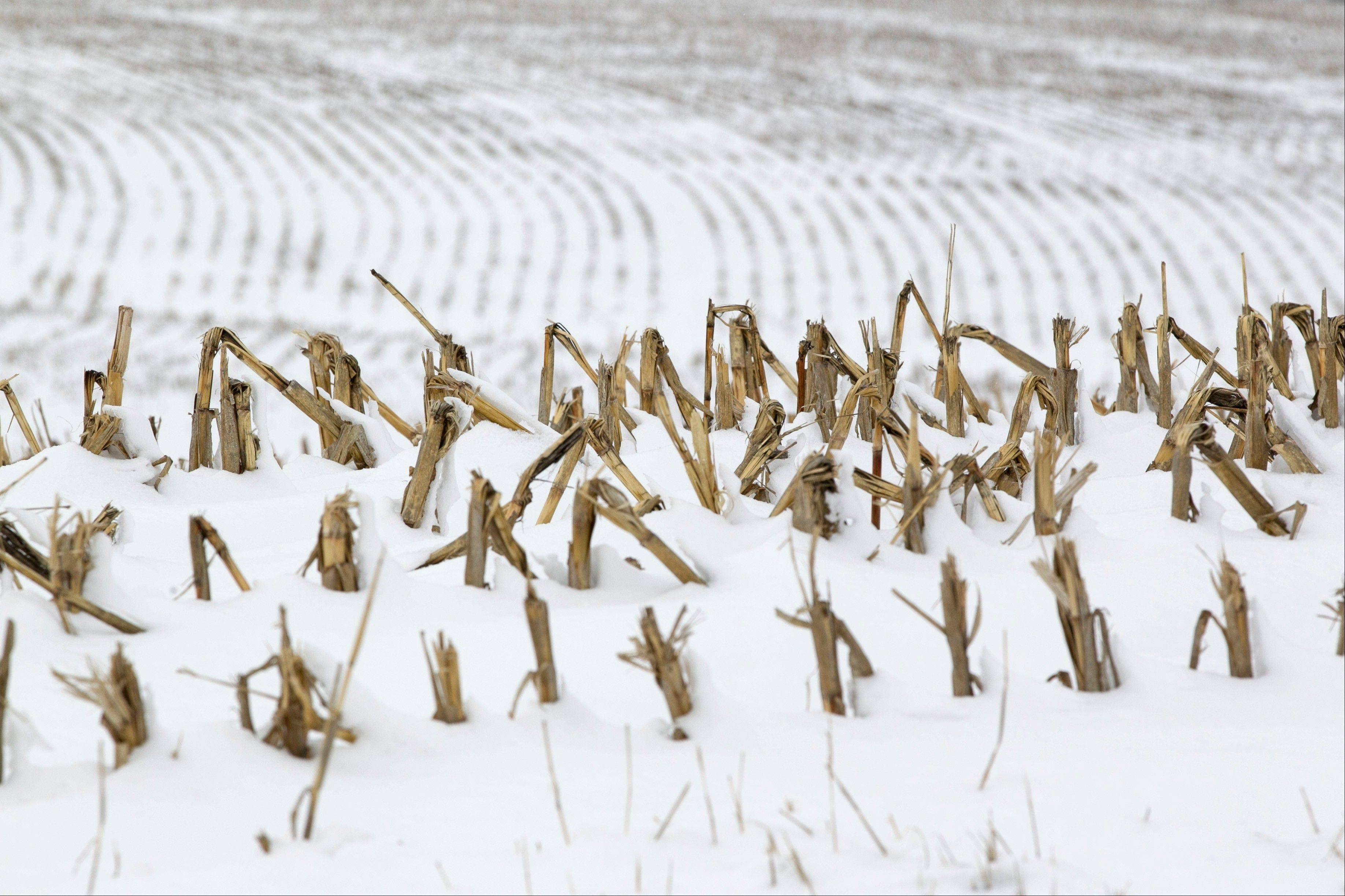 Corn stalks stand in a snowy field near La Vista, Neb. Despite getting some big storms in December, much of the U.S. is still desperate for relief from the nation's longest dry spell in decades. And experts say it will take an absurd amount of snow to ease the woes of farmers and ranchers.