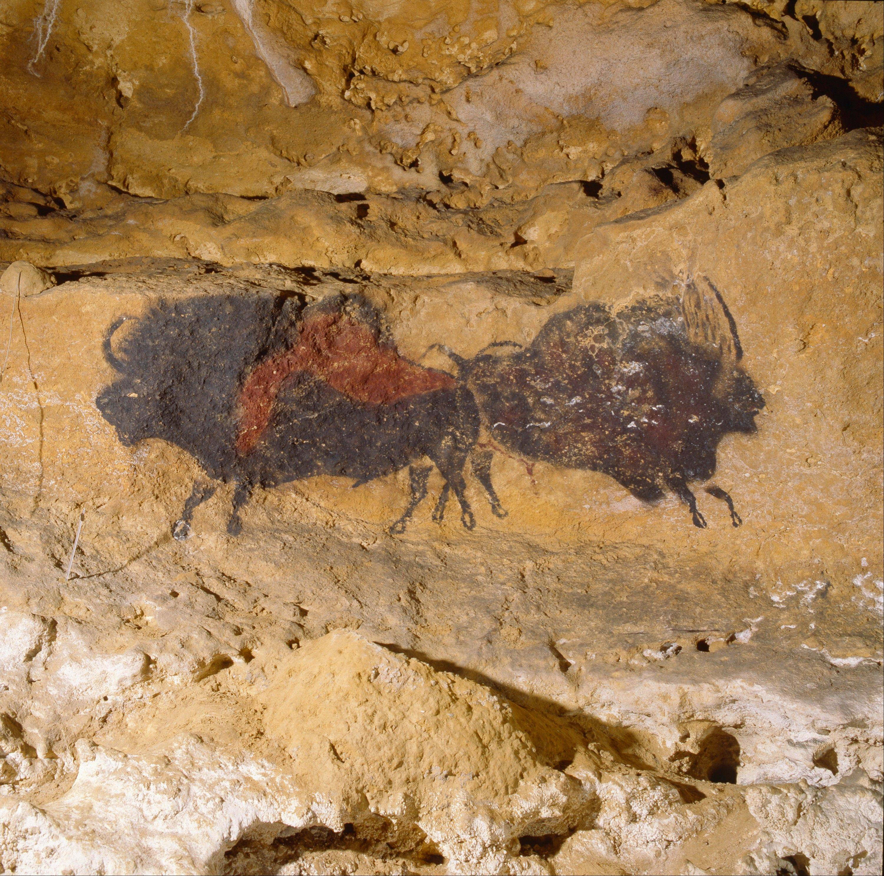 "A prehistoric cave painting of a bison is part of the ""Scenes from the Stone Age: The Cave Paintings of Lascaux"" exhibit, opening March 20 at The Field Museum."