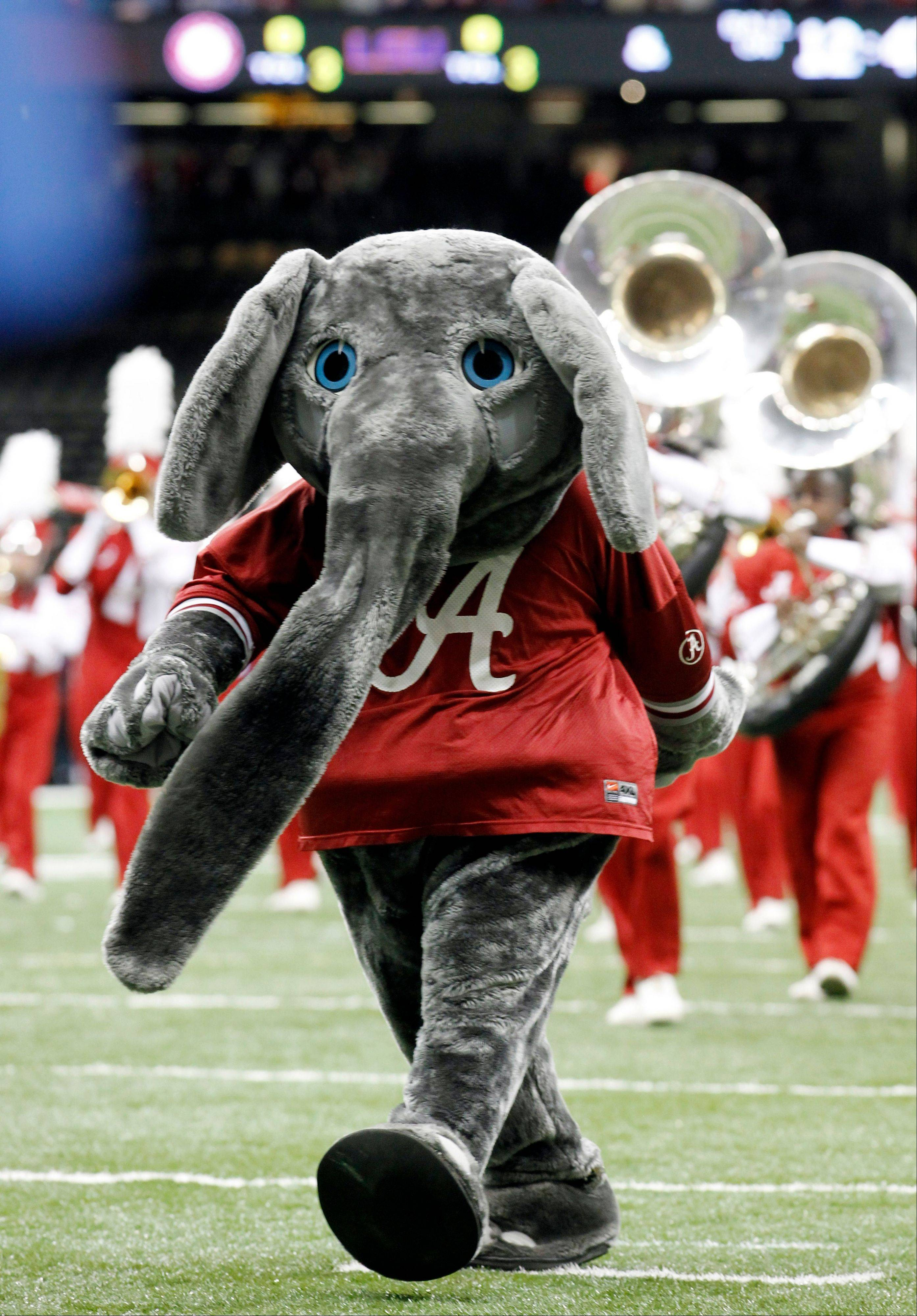 Alabama mascot Big Al performs before the BCS national championship NCAA college football game against LSU in New Orleans.