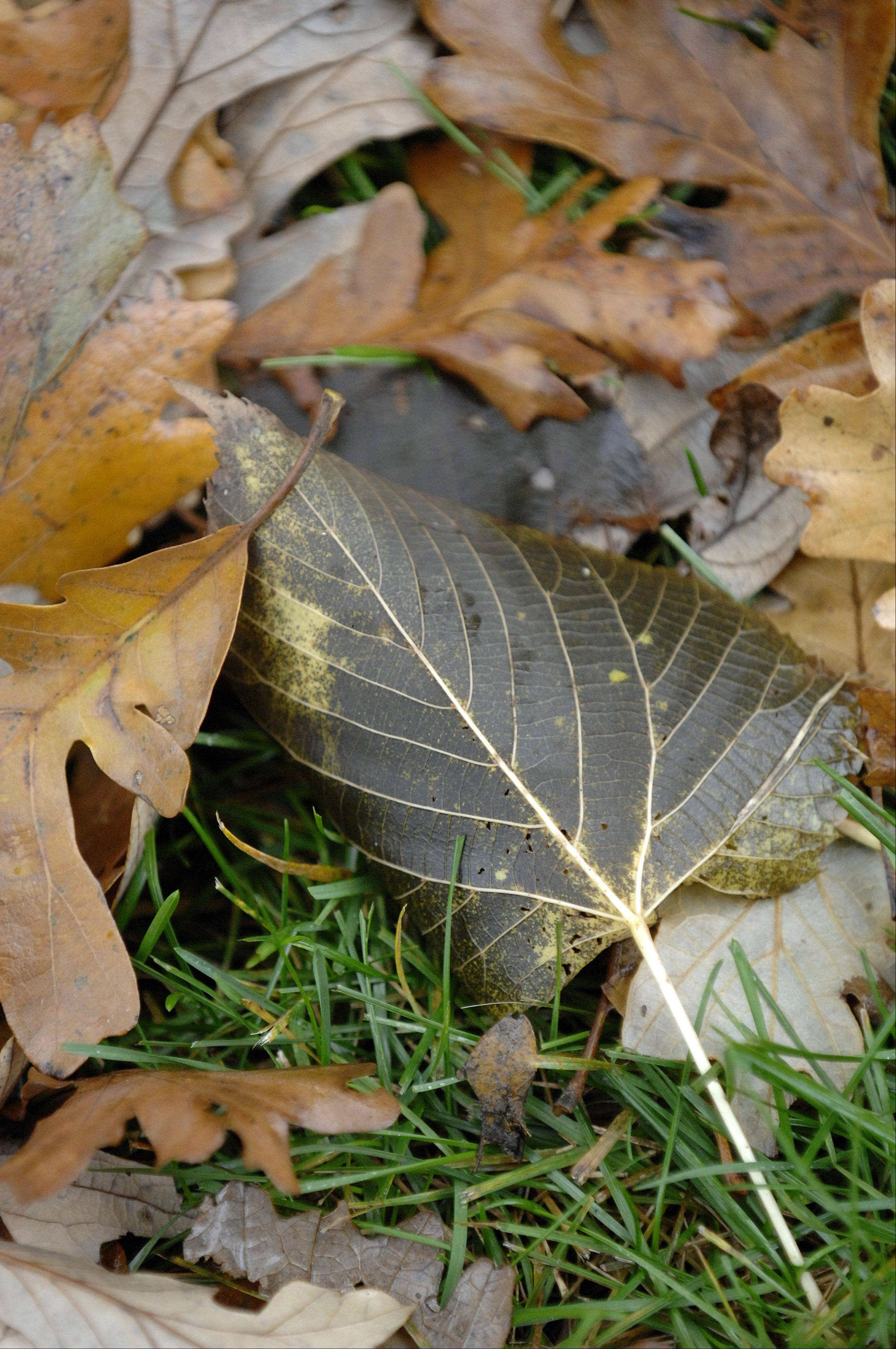 Fallen leaves are one of the few things it's OK to collect from forest preserves.