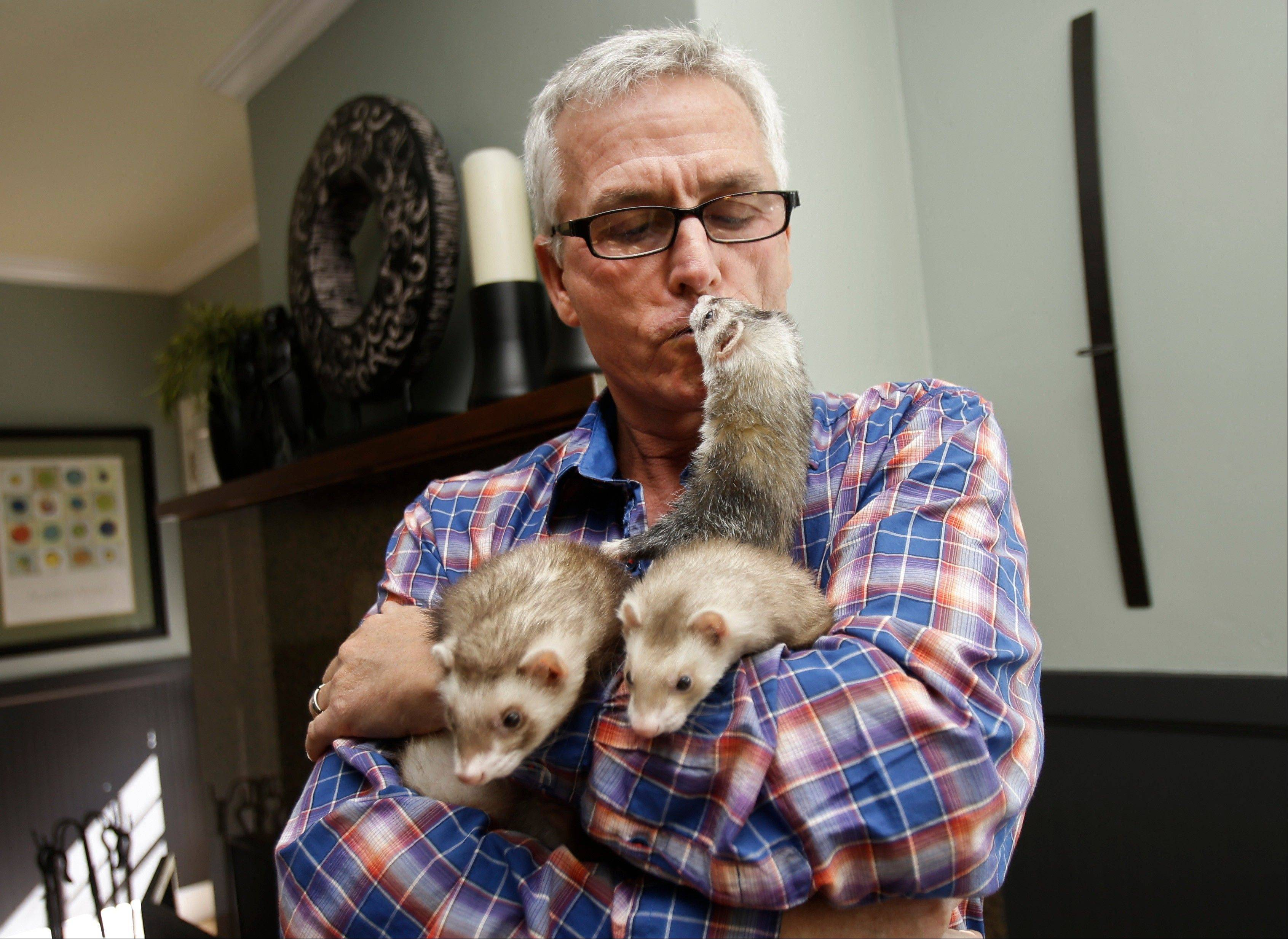 Pat Wright, an advocate for legalizing ferret ownership in California, gets a kiss from one his three ferrets at his home in La Mesa, Calif.