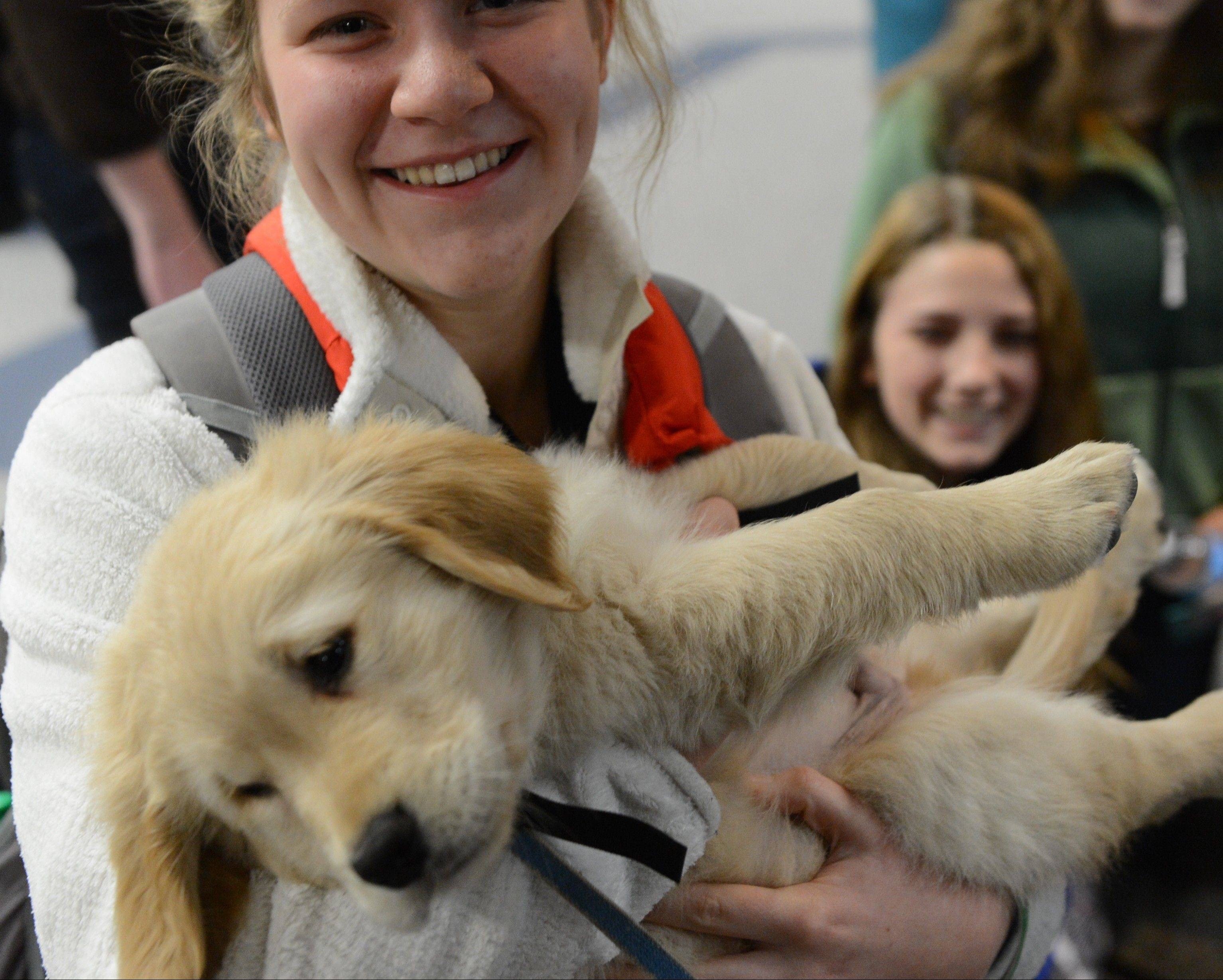 A Newtown High School student hold nine-month-old Isaiah, a comfort dog in training.